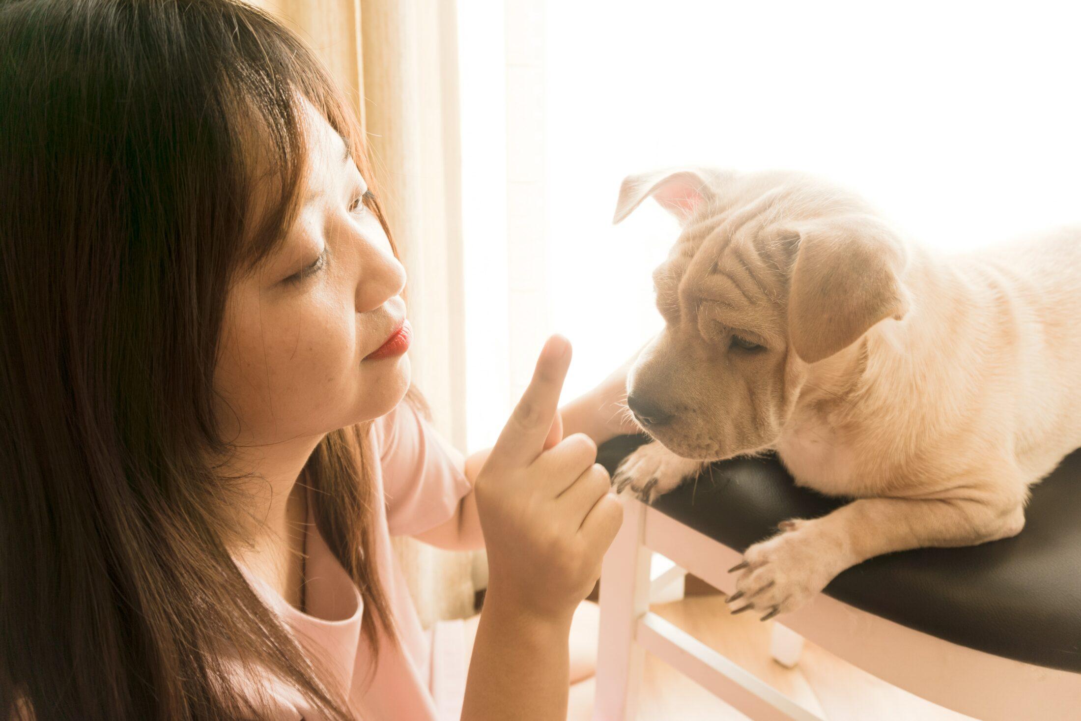 Ensinar o nome dele logo cedo é uam forma de adestrar cão filhote desde cedo.