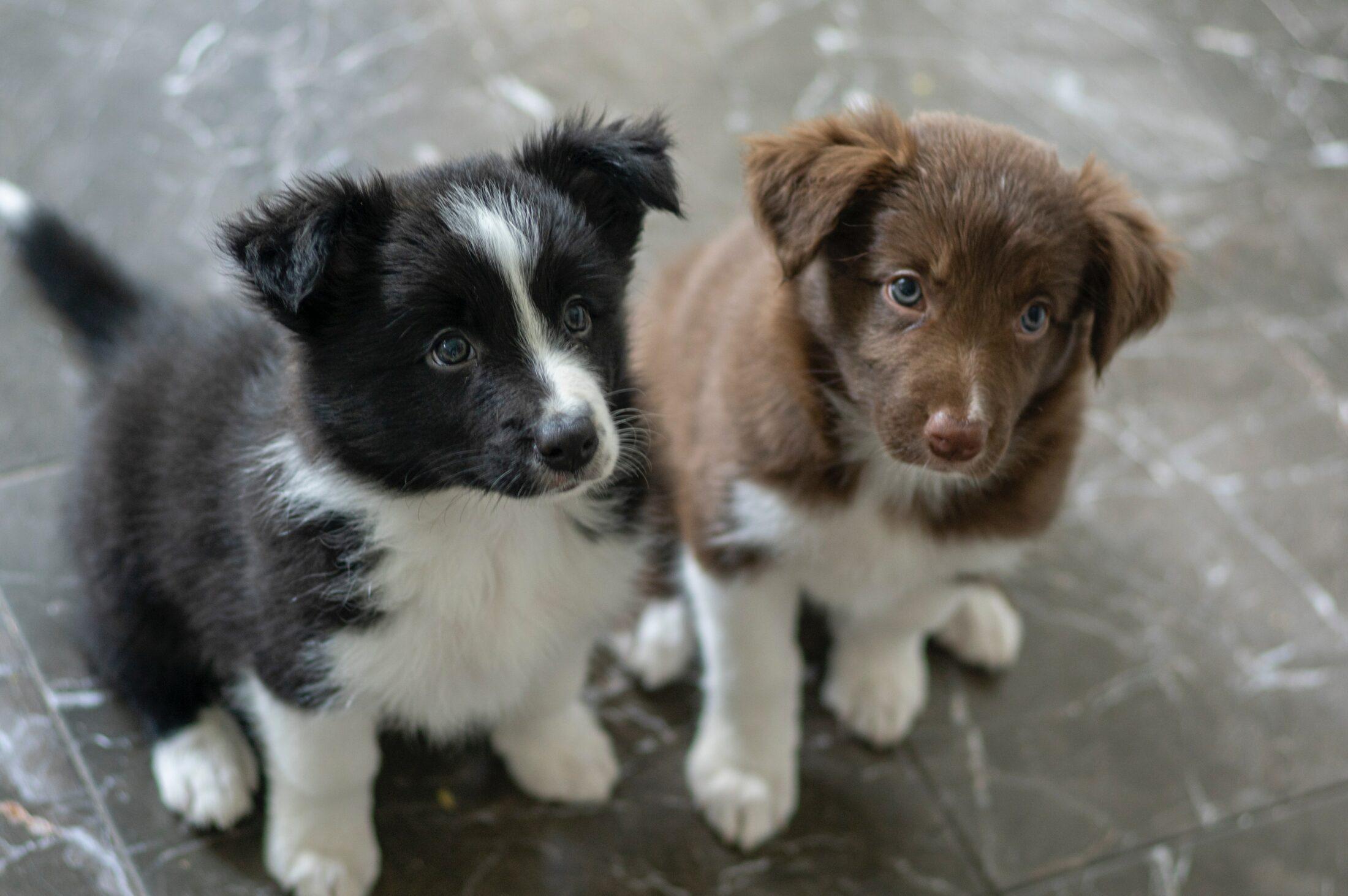 A socialização faz parte da rotina de adestrar cão filhote.