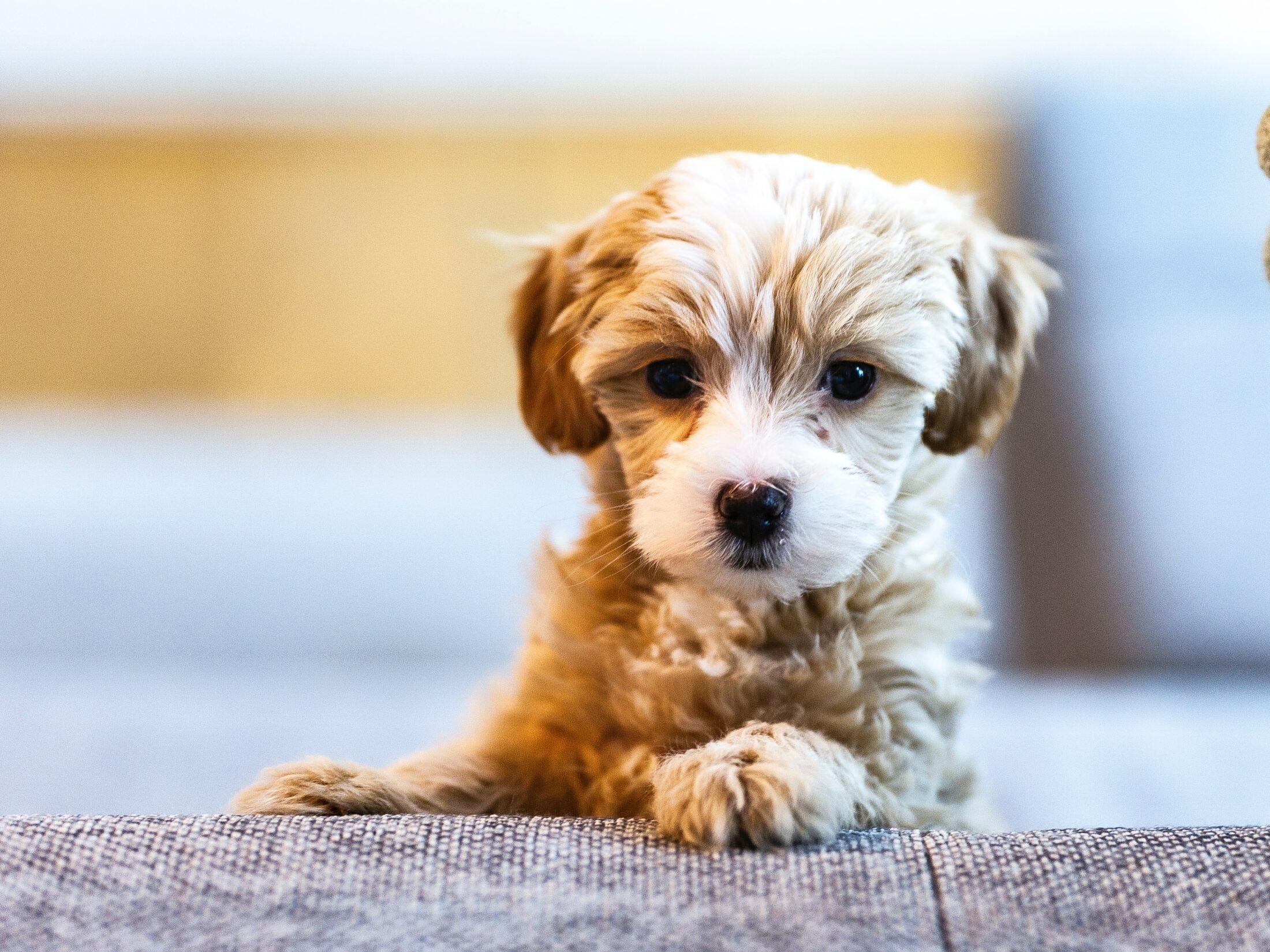É preciso adestrar cão filhote para fazer suas necessidades no local certo.