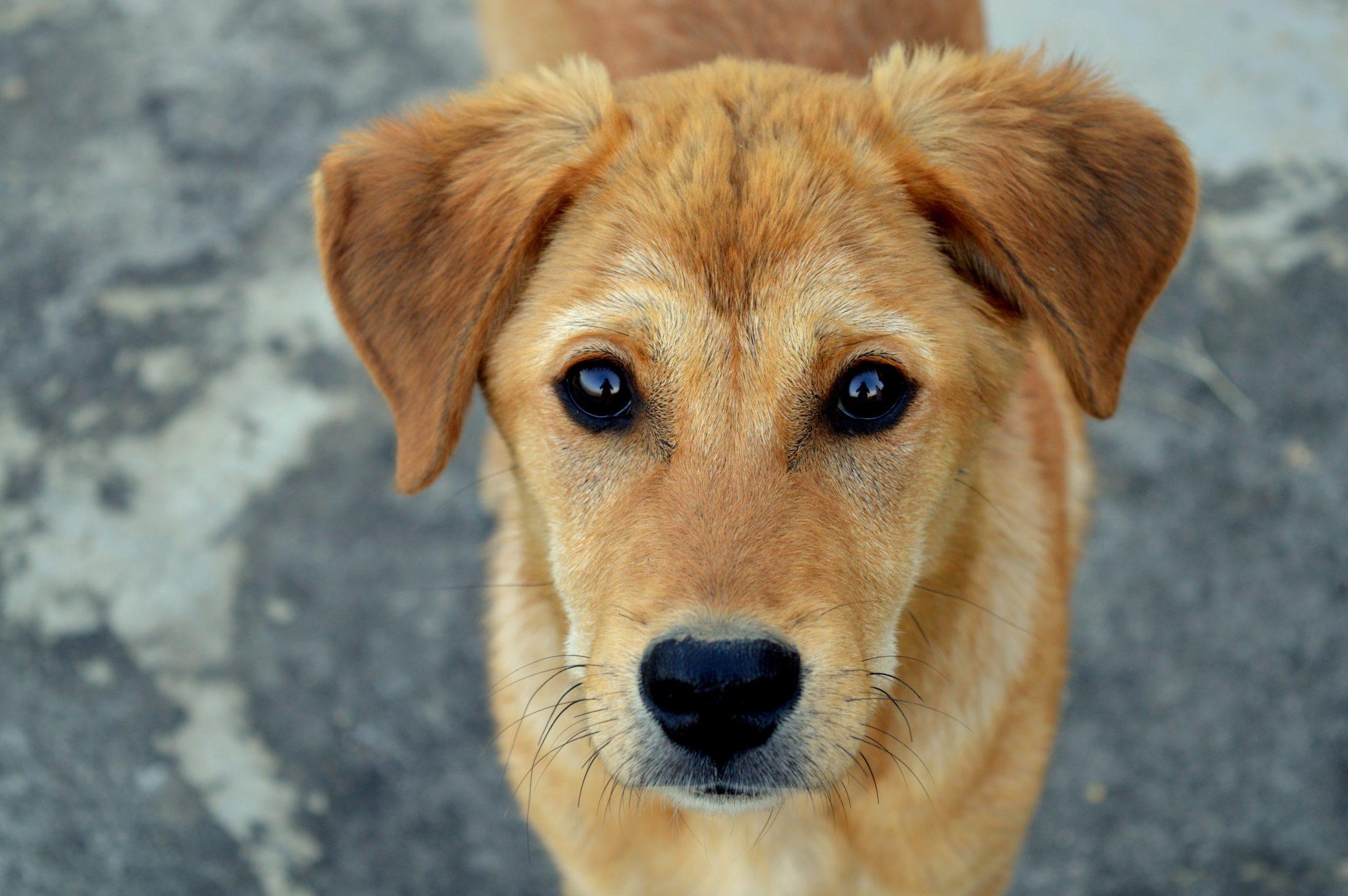 cachorro de abrigo esperando ser adotado