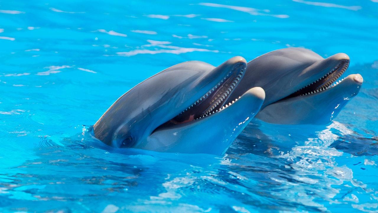Golfinhos são animais fofos e perigosos