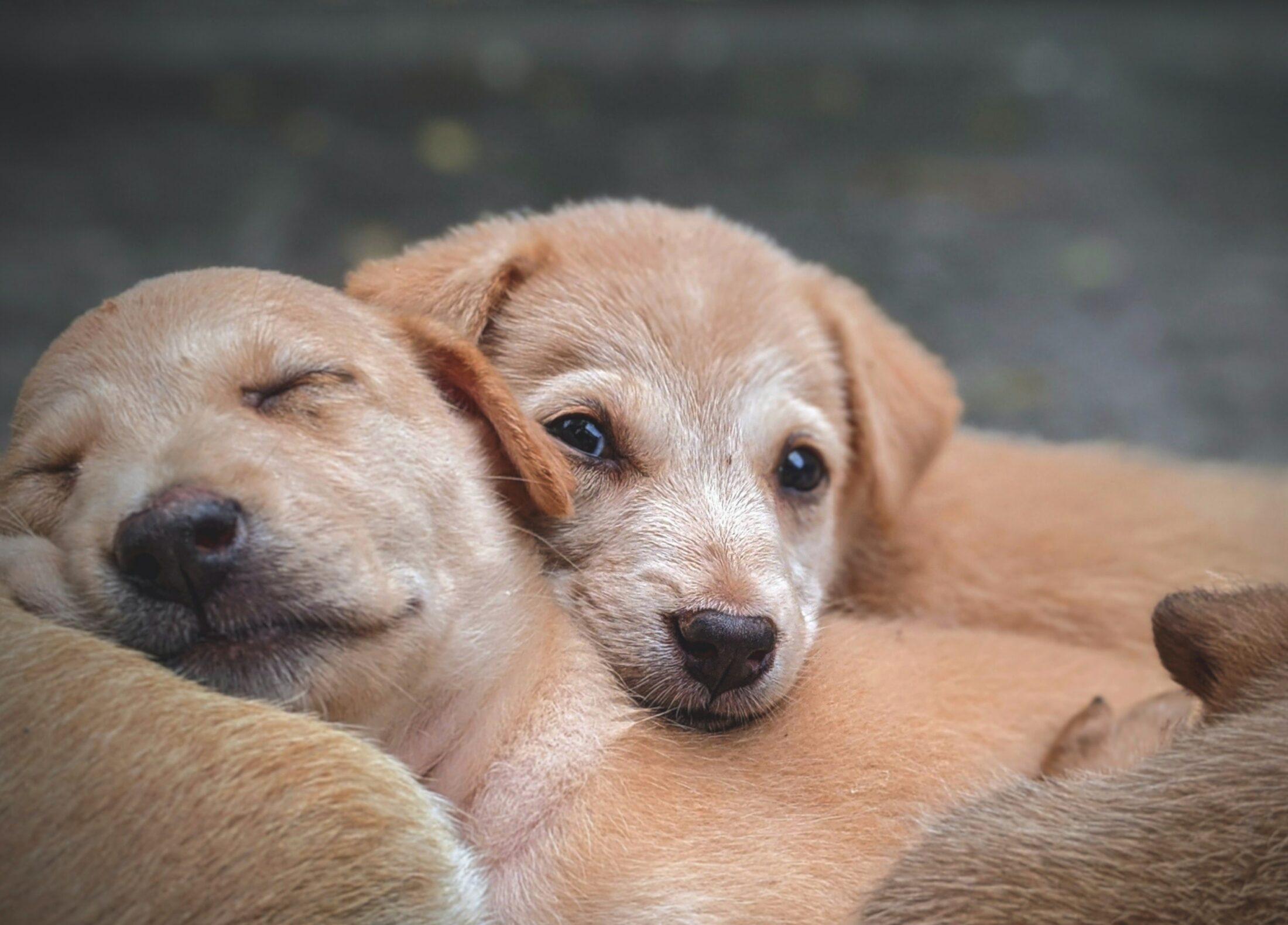 A apólice de seguro animal pode cobrir certas situações, dependendo das coberturas escolhidas.