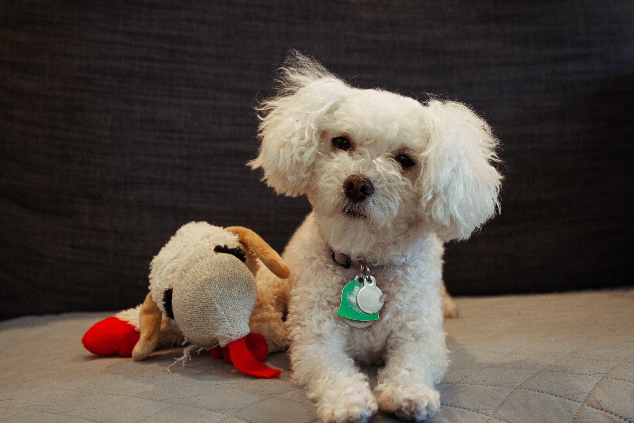 cachorro com brinquedo de pelúcia ao seu lado no chão.