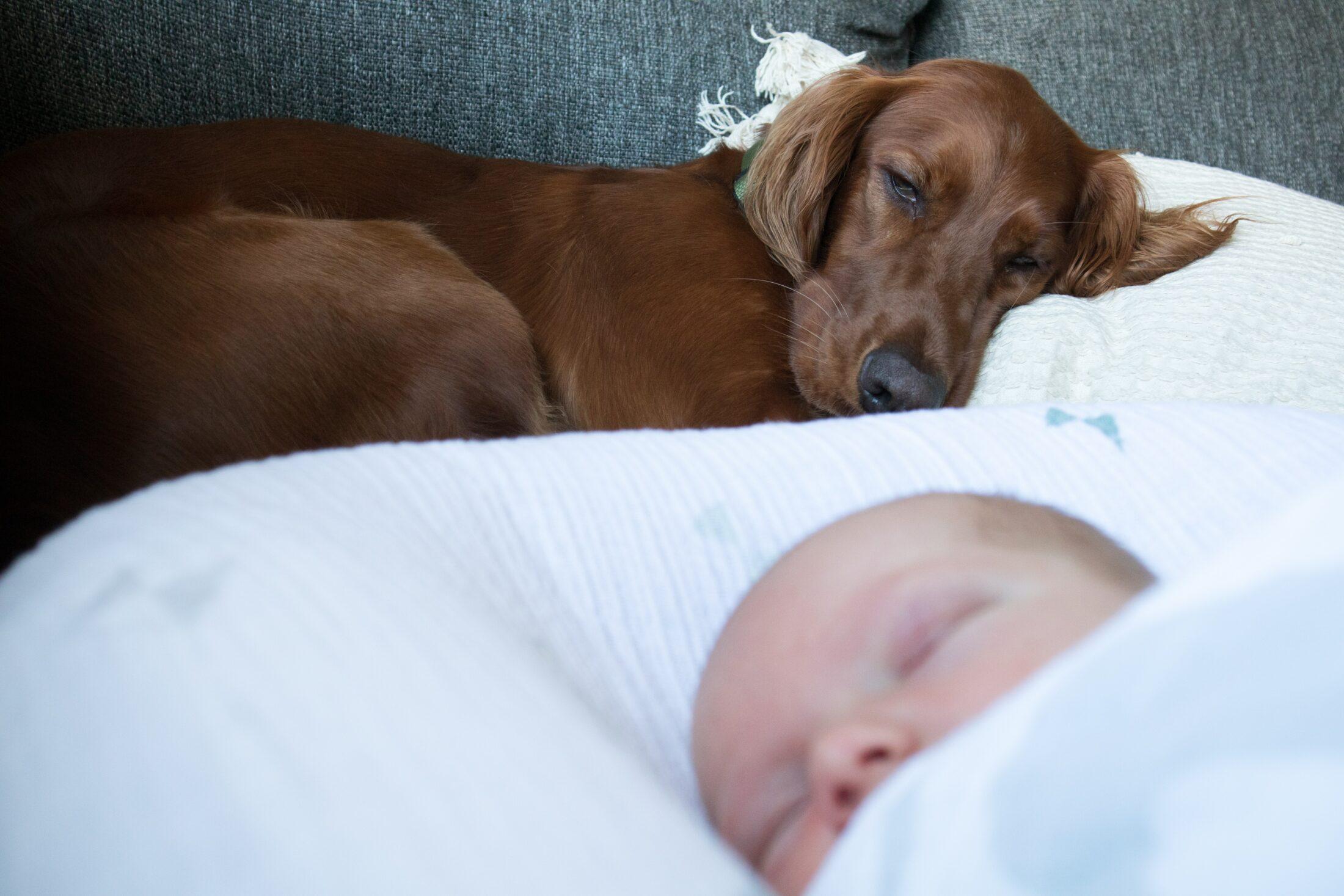 Cachorro e gato juntos - setter