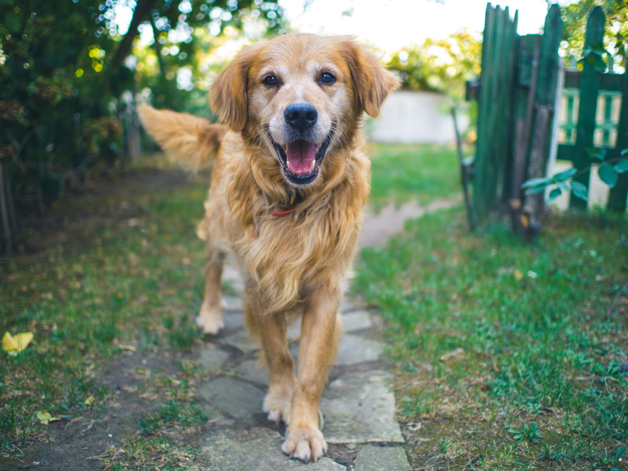 Cachorro fazendo cocô no jardim