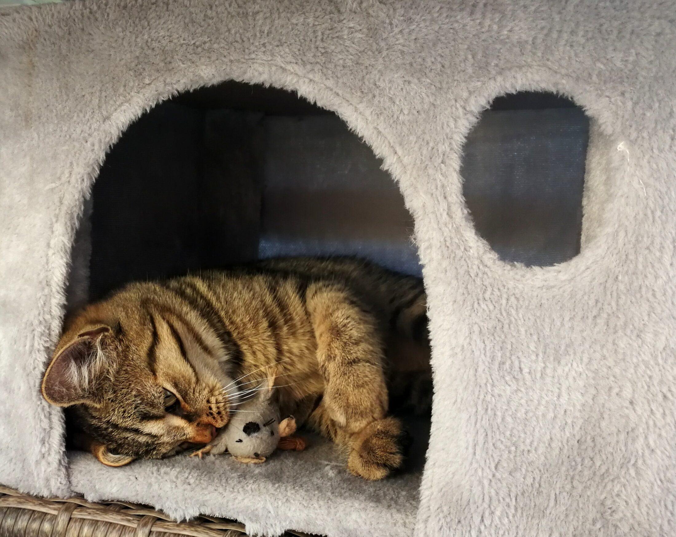 Cachorro filhote e gato adulto juntos precisam de um local para fugir um do outro.