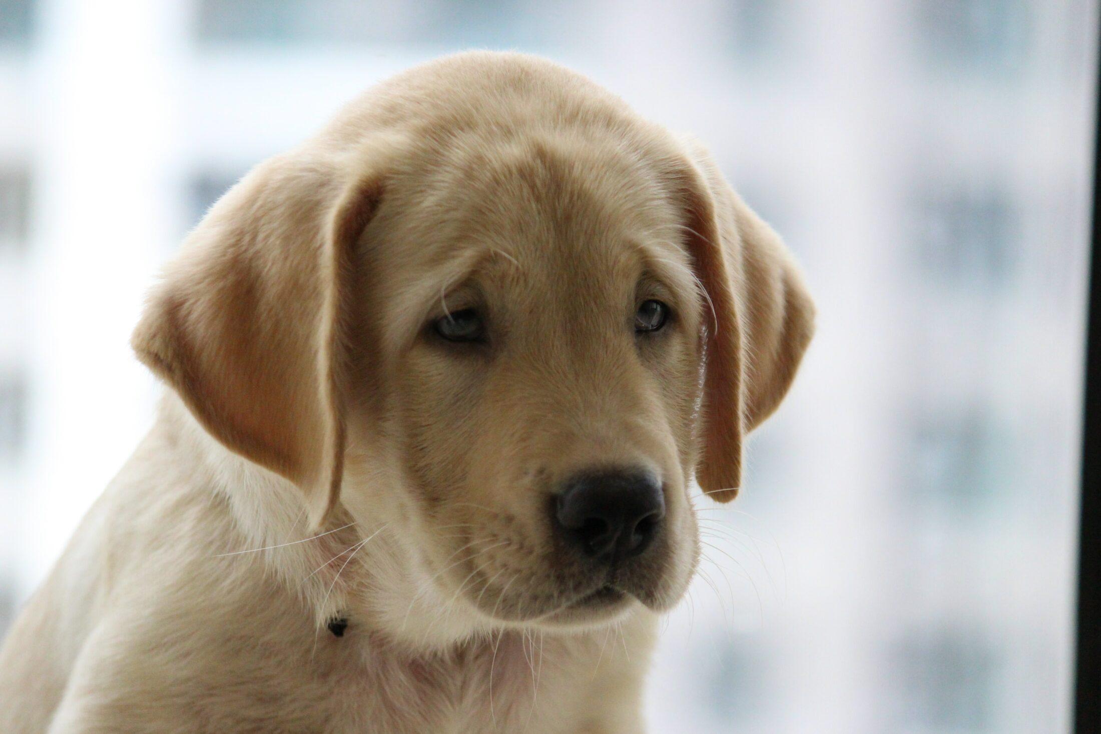 Cachorro filhote e gato adulto podem se dar bem dependendo da raça.