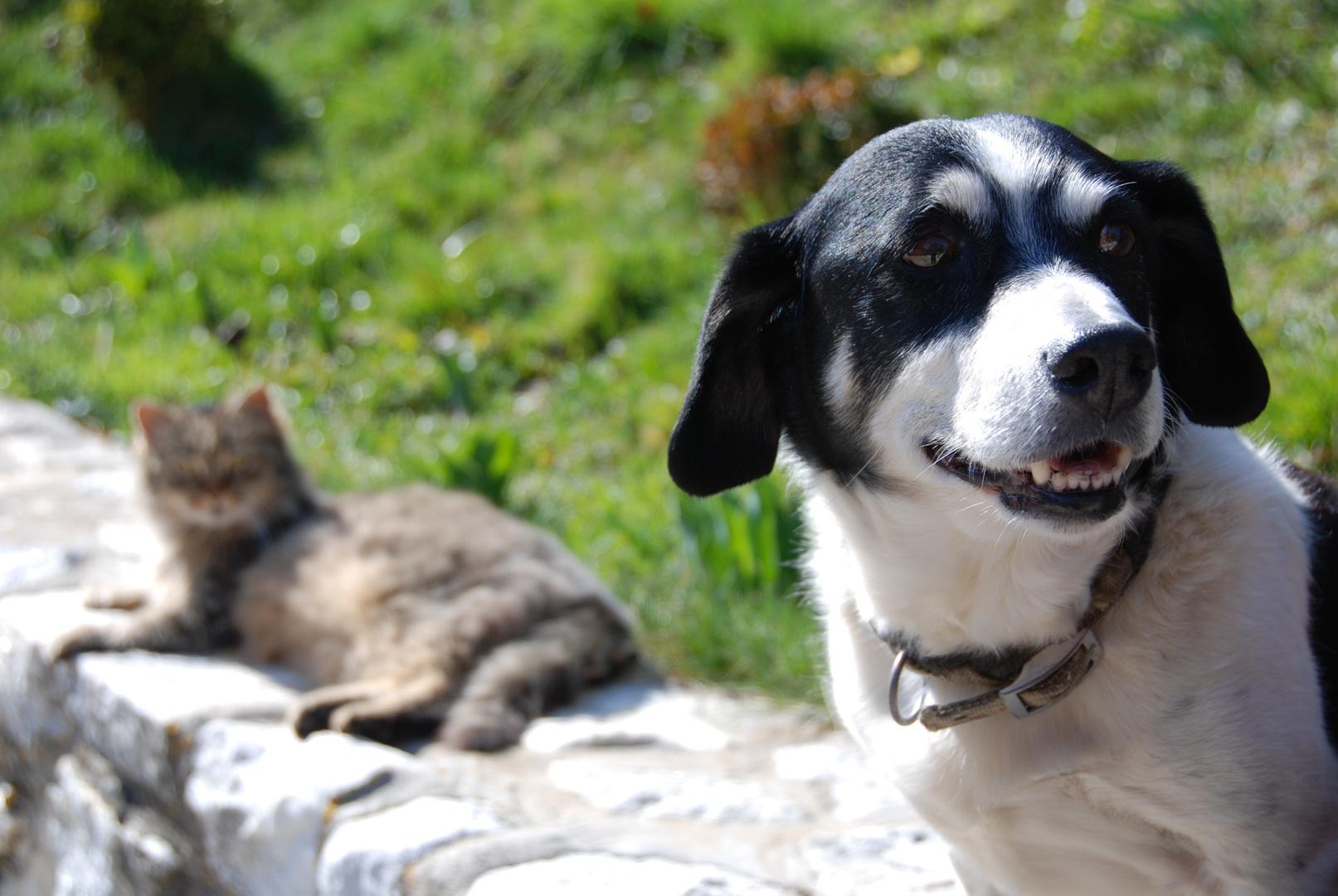 cão e gato em abinete rural externo