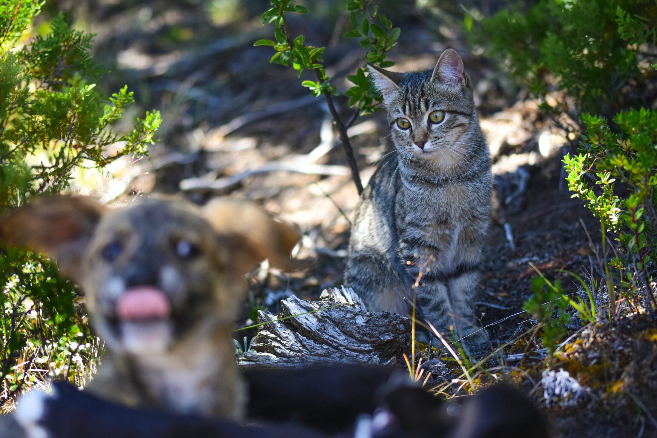 Cao e Gato do lado de fora da casa