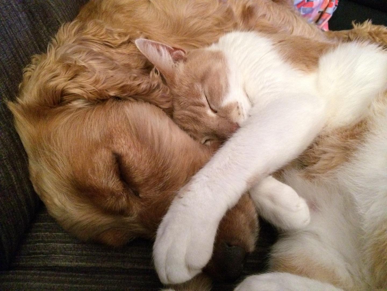 Cão e Gato deitados abraçados
