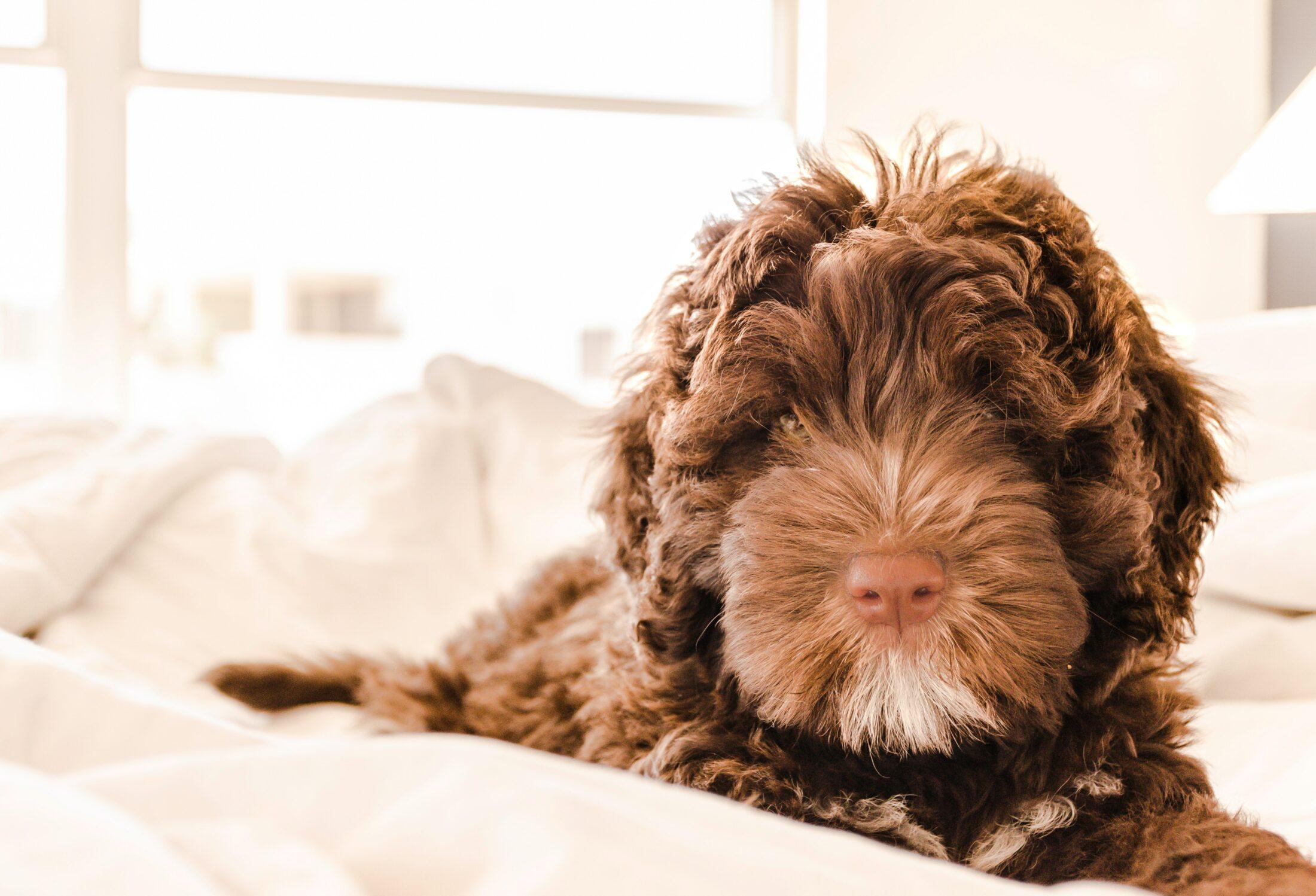 Você deve entender também como lavar cama de cachorro à mão.