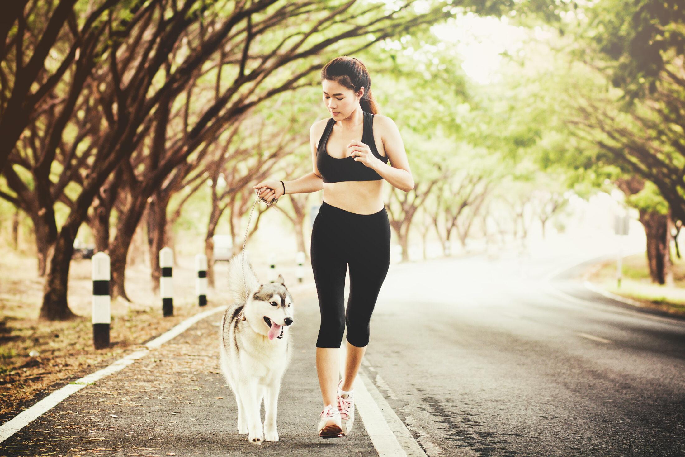 Mantenha o animal hidratado após correr com cachorro.