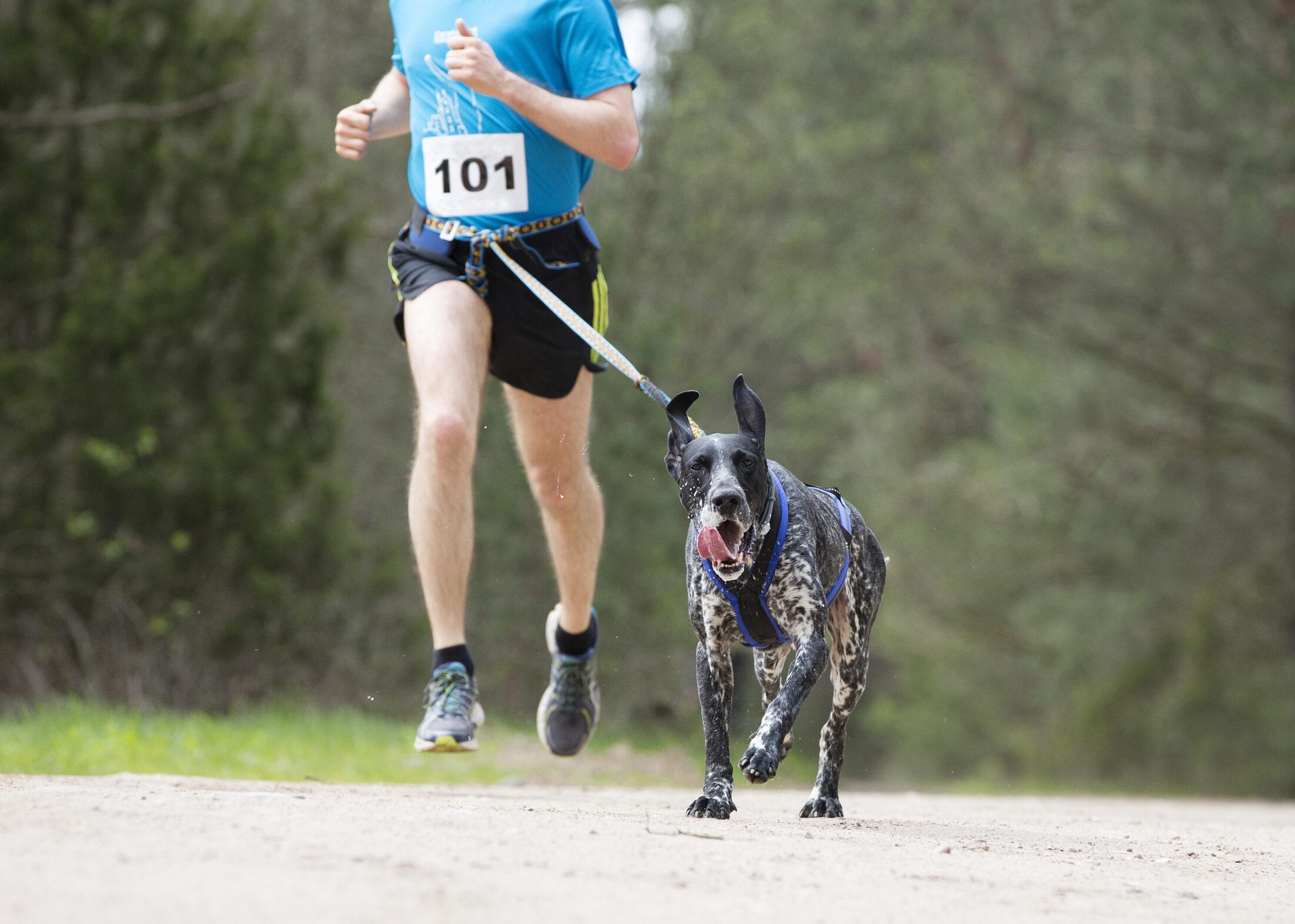 Para correr com cachoror é preciso respeitar a segurança.