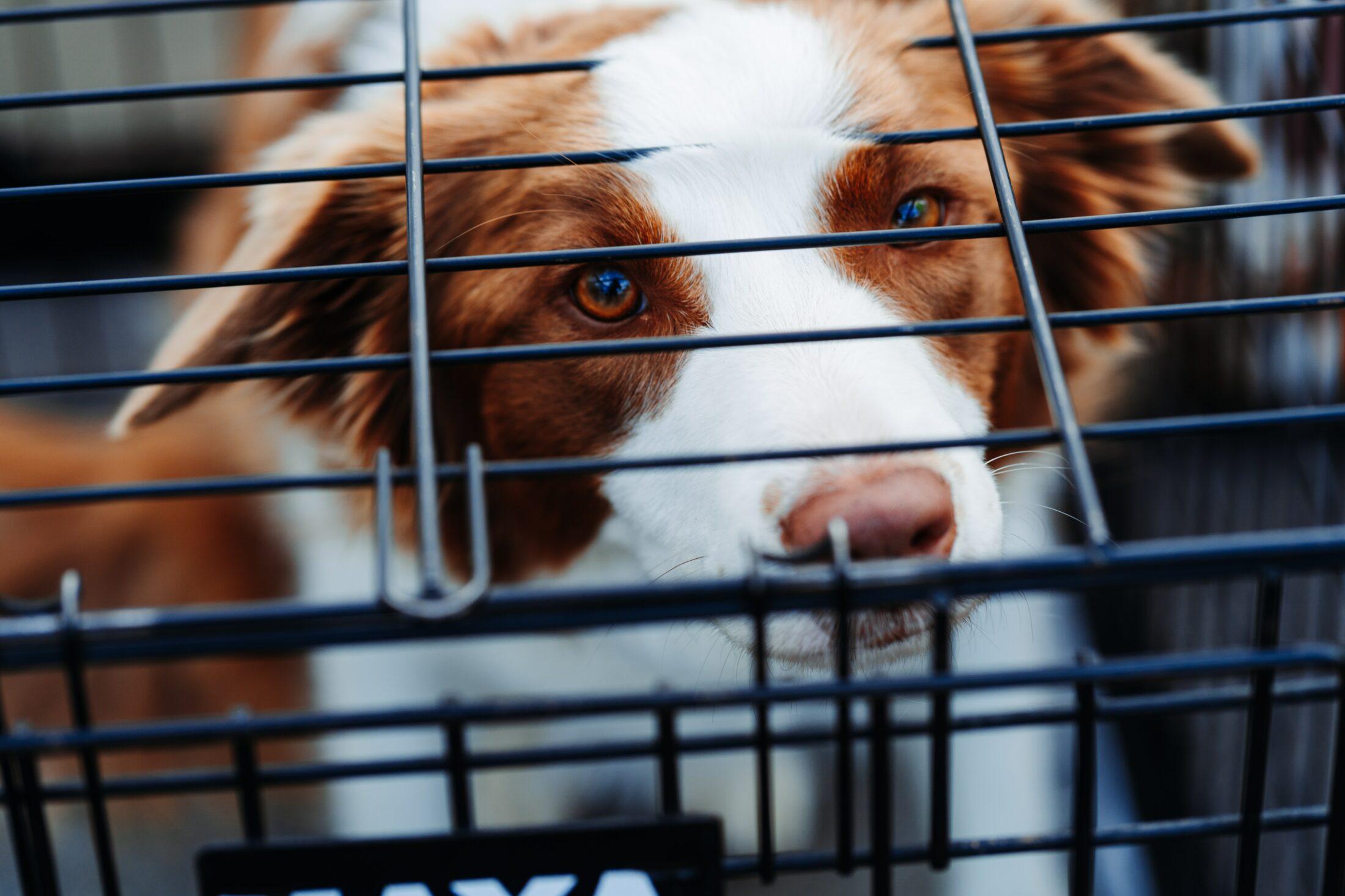 cachoro preso em gaiola de criador de cachorro