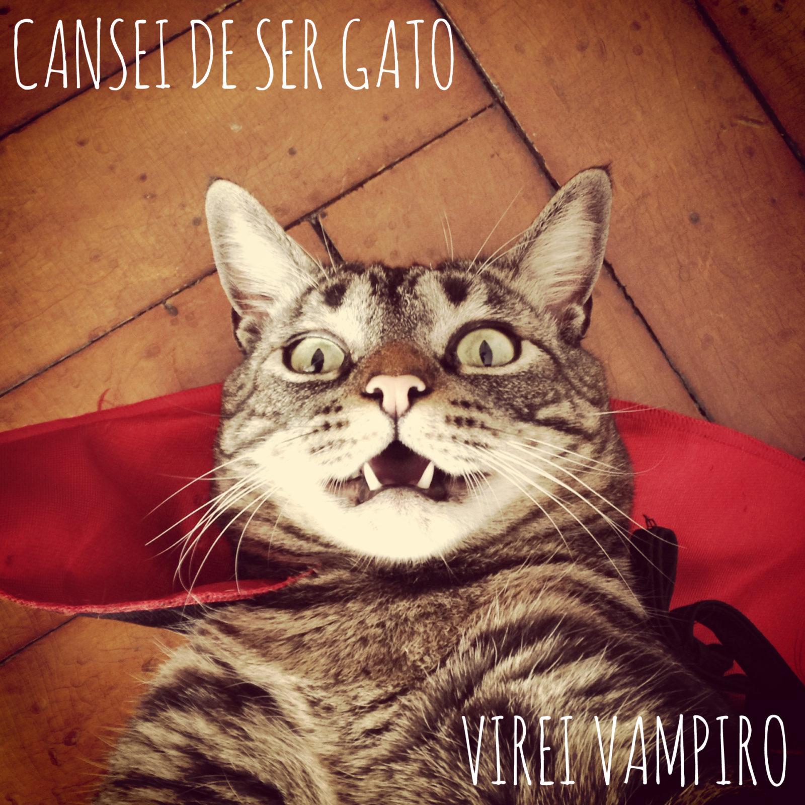 Gato Chico é o nosso representante brasileiro dos animais fantásticos que fazem sucesso na internet