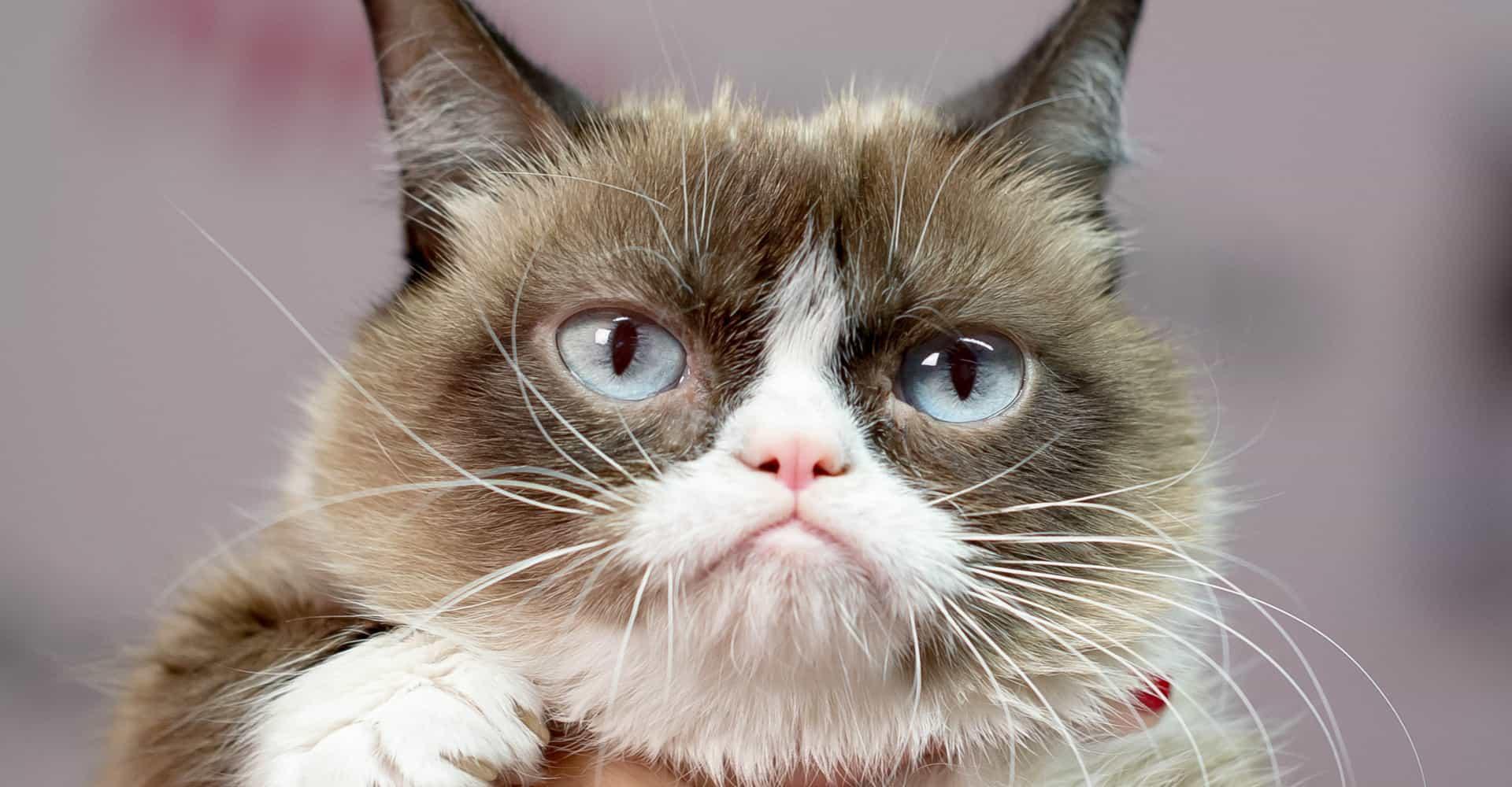 animais fantásticos grumpy cat