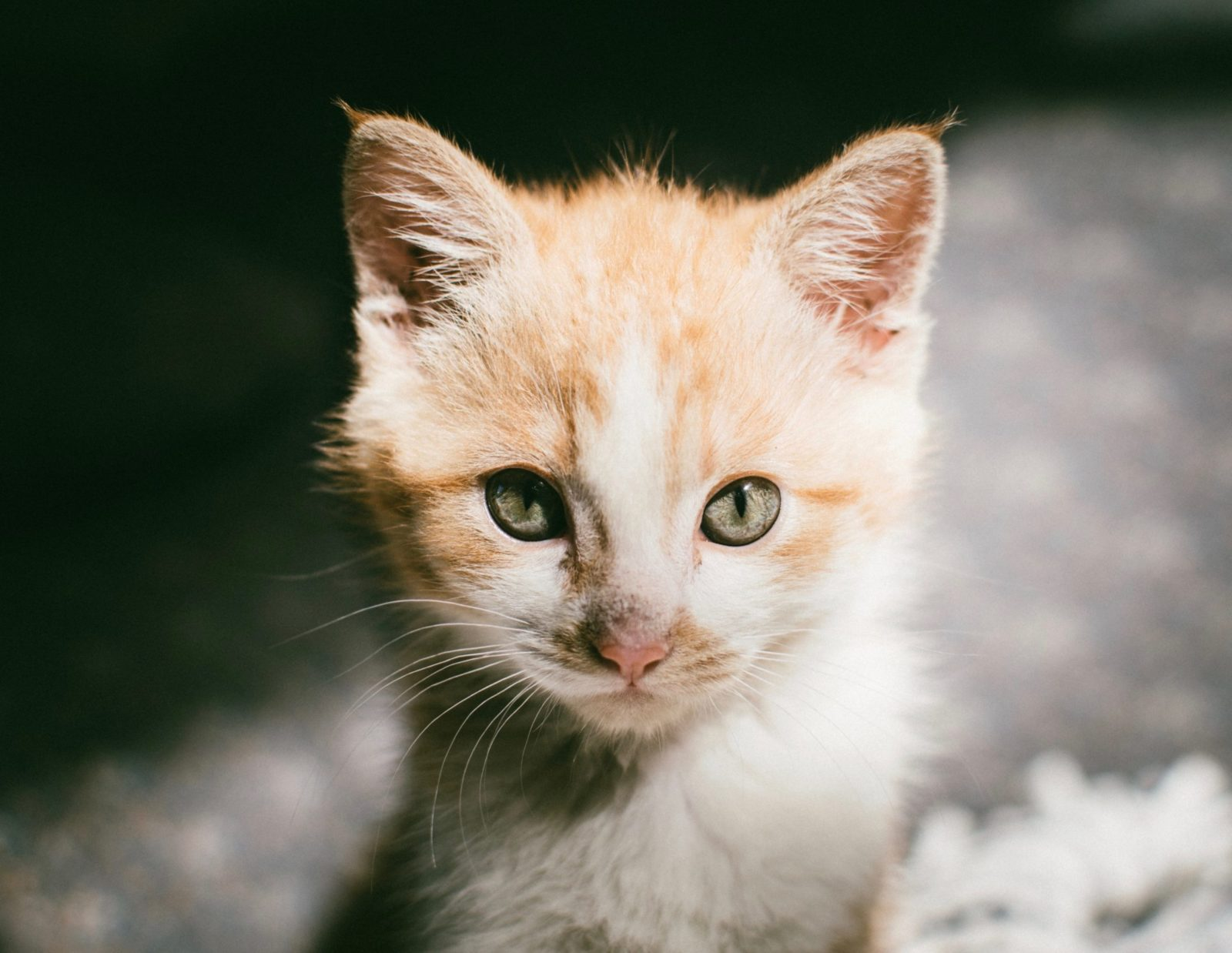 Felizmente não há gatos com síndrome de Down