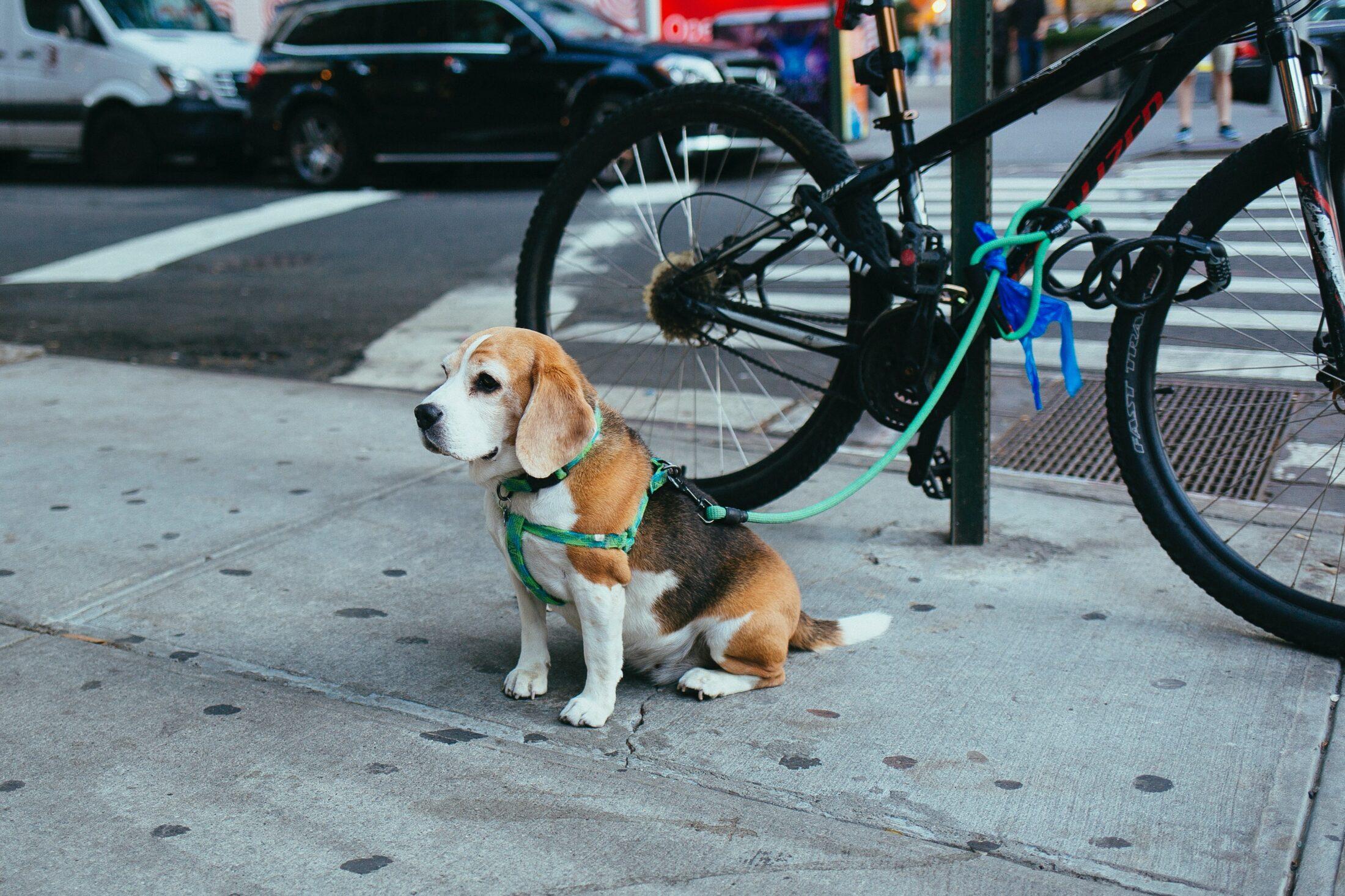 Guias para cachorro para bicicleta
