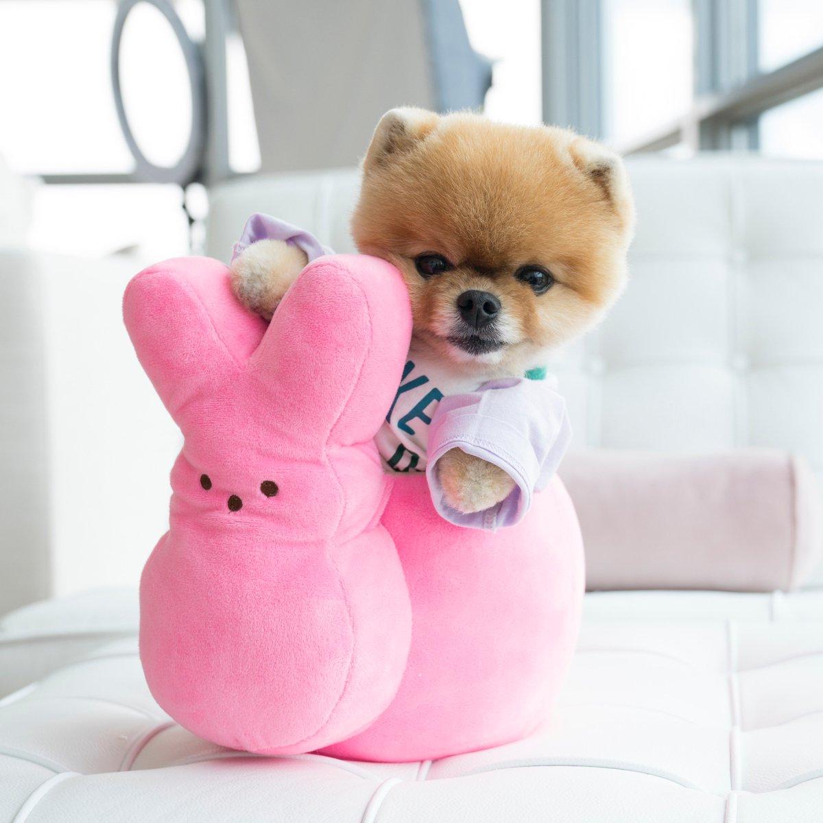 Jiffpom é o mais popular de todos da lista de animais fantáticos nas redes sociais.