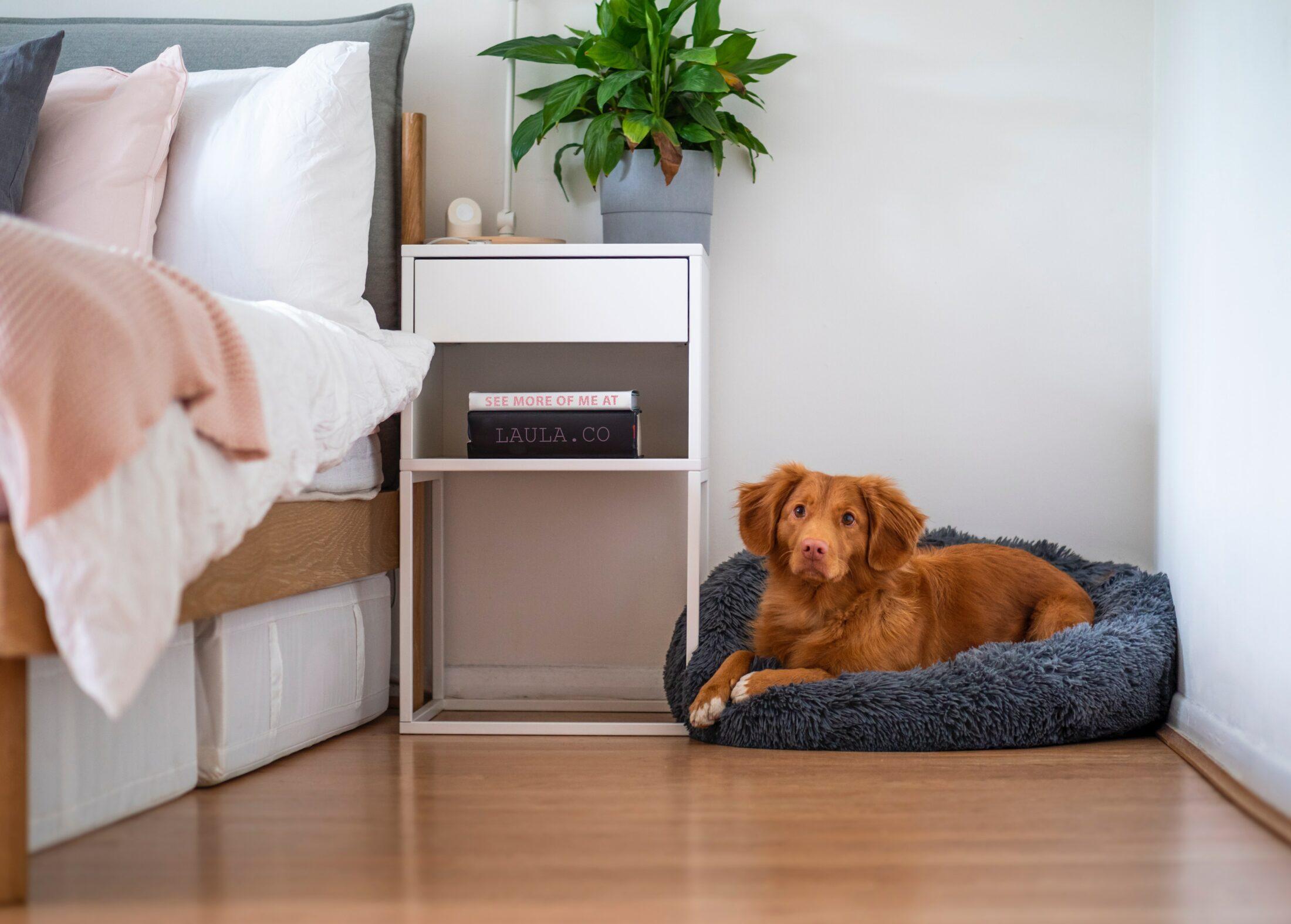 Lar a prova de pet dando um espaço no quarto para o animal