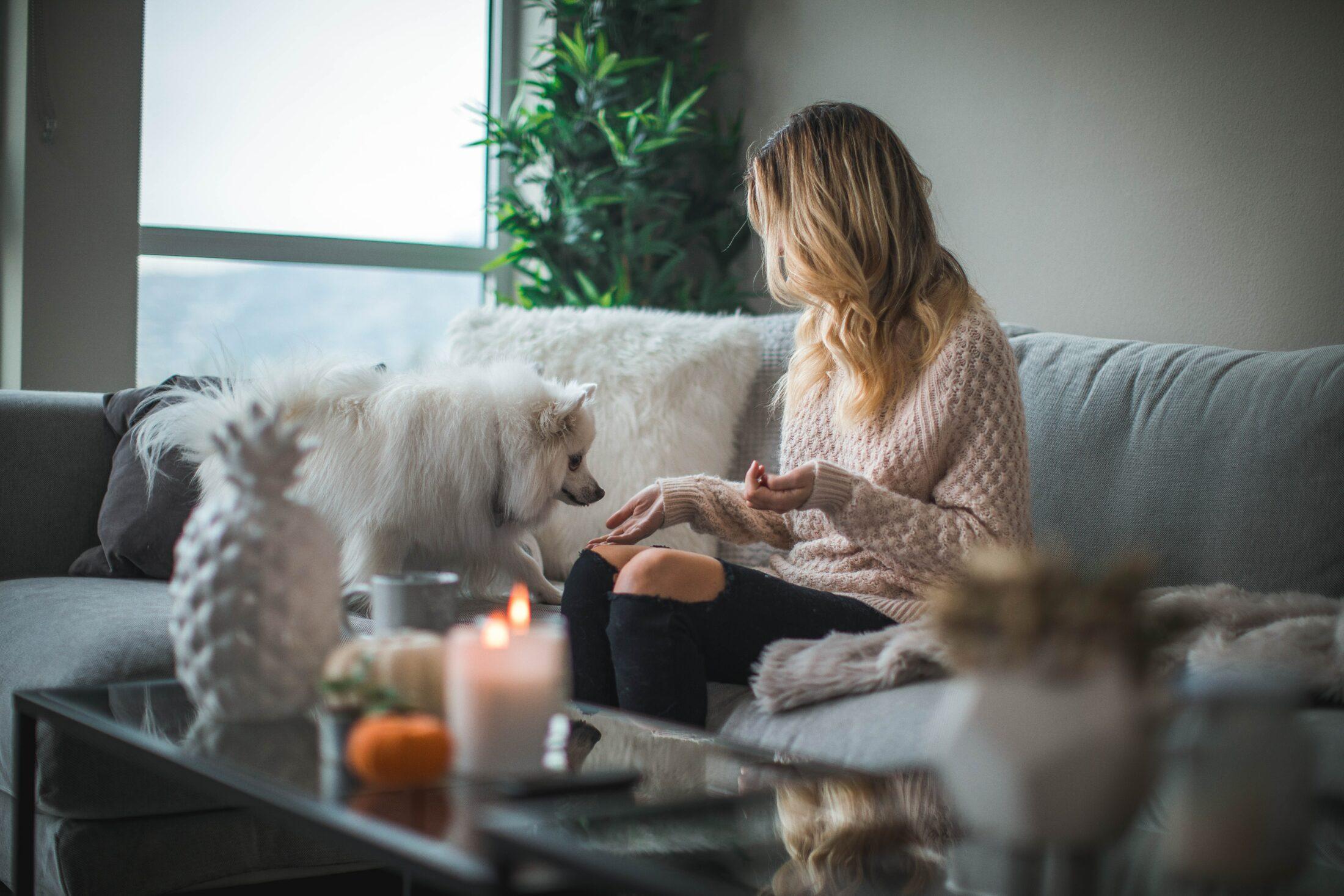 Um lar à prova de pet não pode ter velas acesas pela casa sem supervisão.