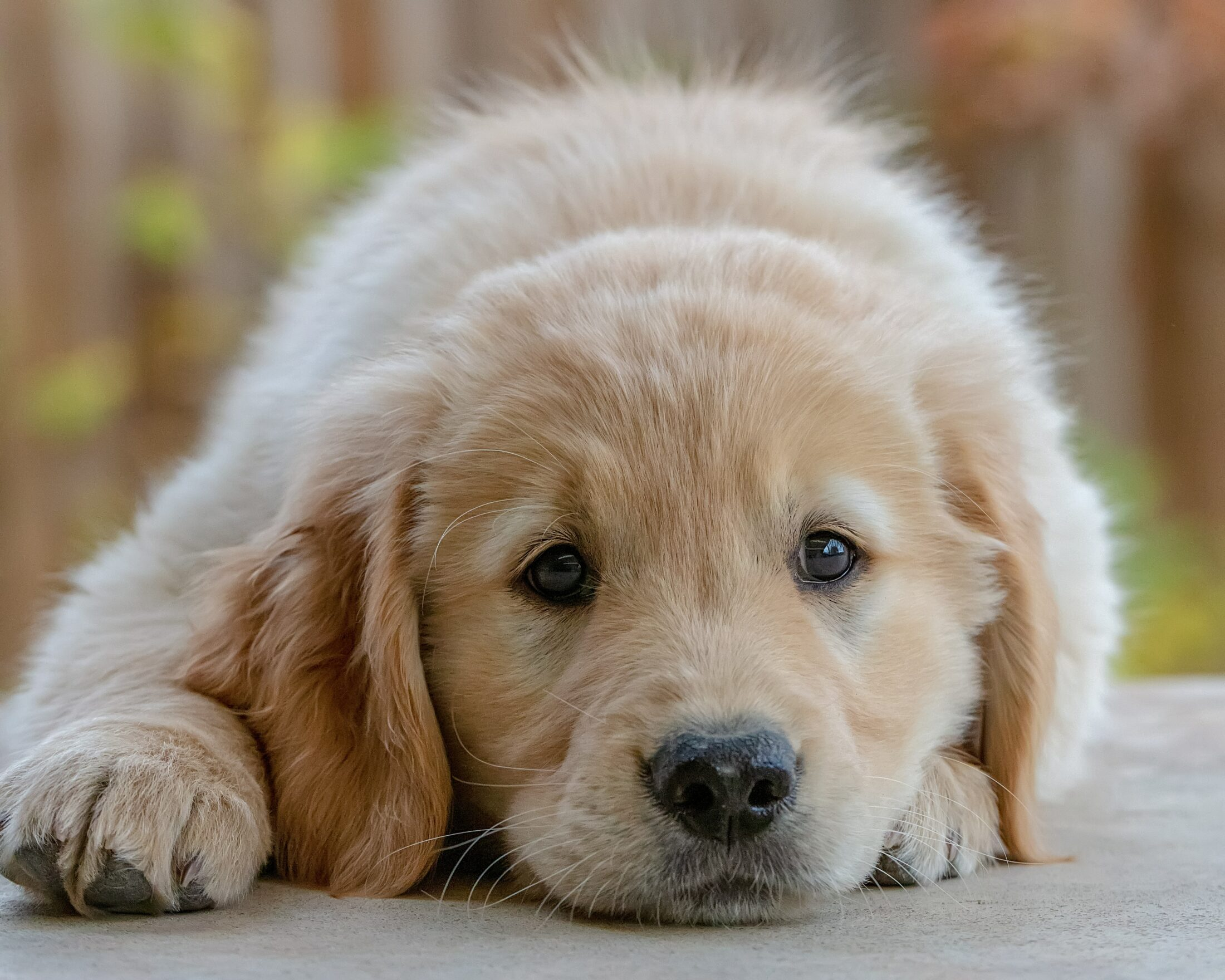 Manter a rotina é importante na mudança com cachorro.