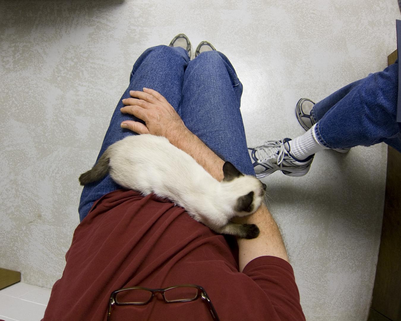 gato com Plano de Saúde Pet no colo do dono na sala de espera do veterinário