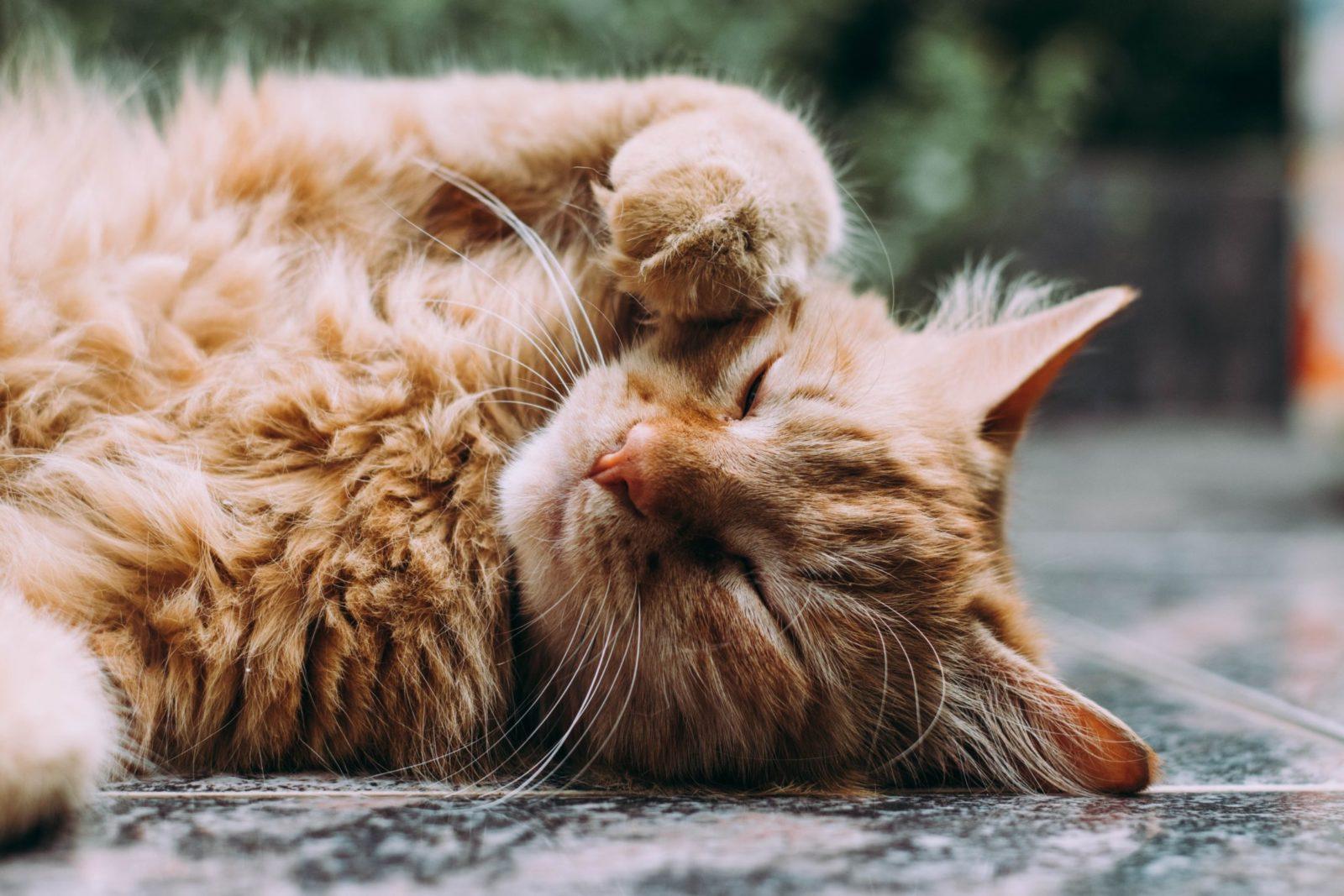Há vários outros benefícios comprovados em por que os gatos ronronam.