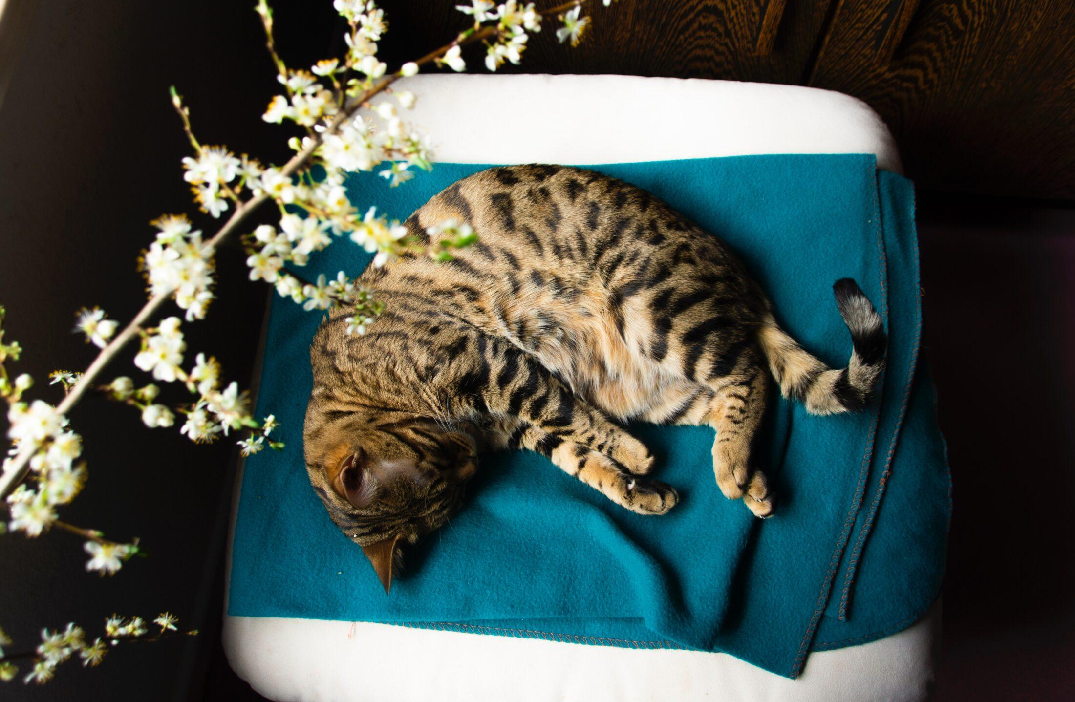 Em dos tipos de relacionamentos em que o gato depende emocionalmente do humano de vice versa.