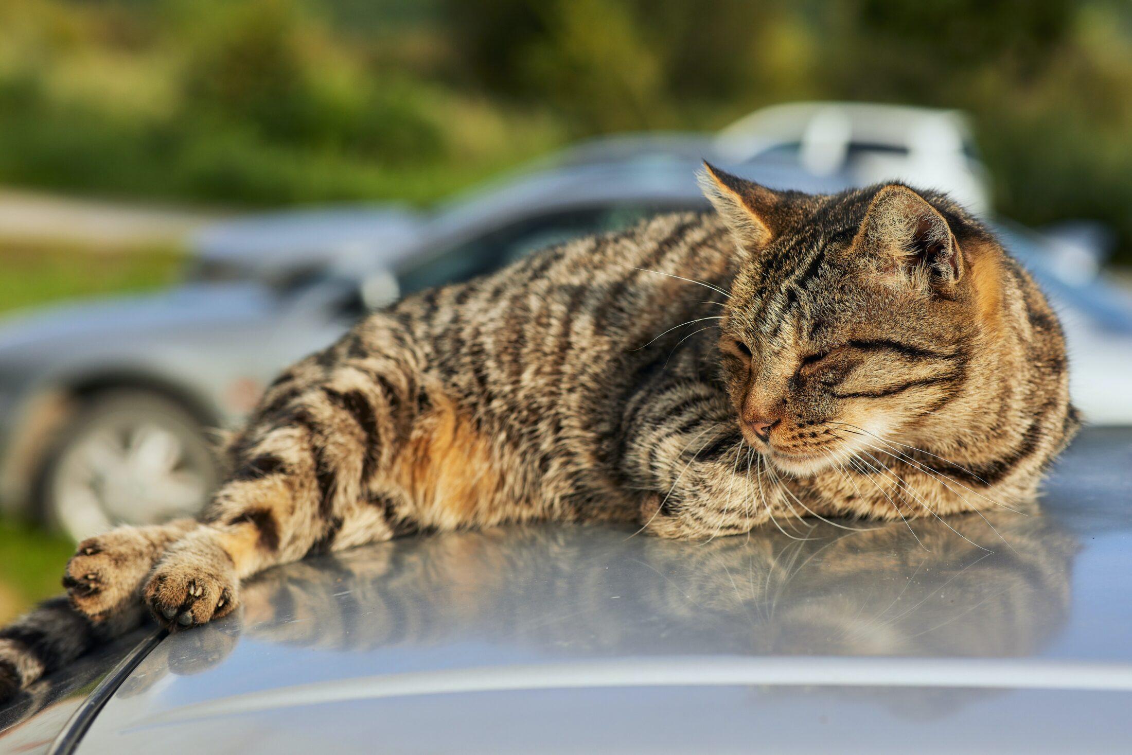 Especialistas em comportamento animal descobriram que podemos classificar vários  tipos de relacionamentos entre humanos e gatos.