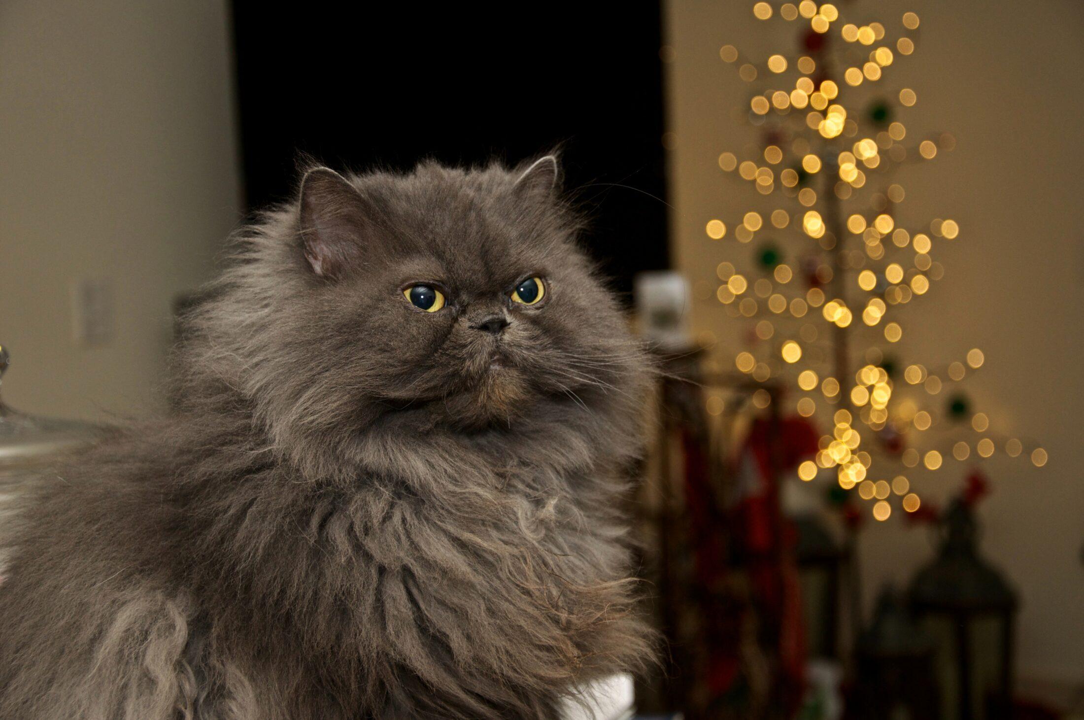 Humano e gato são emocionalmente ligados, mas de forma saudável para ambos.