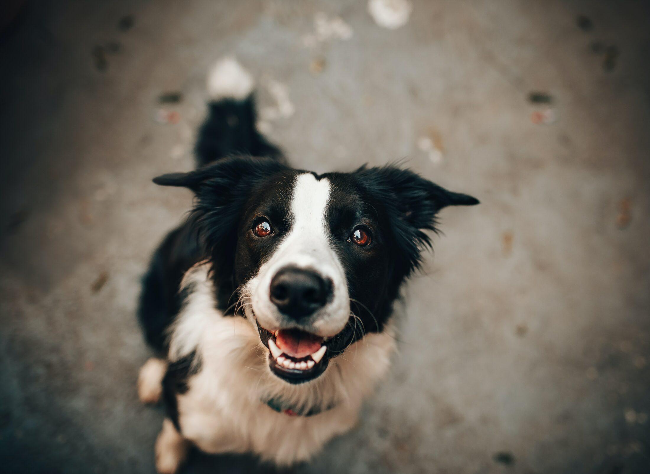 O tutor de primeira-viagem já deve estar ciente de tudo que precisa para recebe ro cachorro em casa.