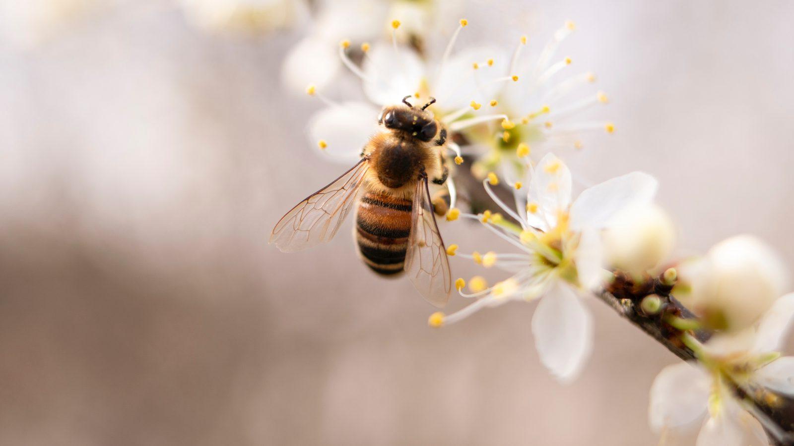 A abelha é um animal muito peculiar e altamente importante para a natureza.