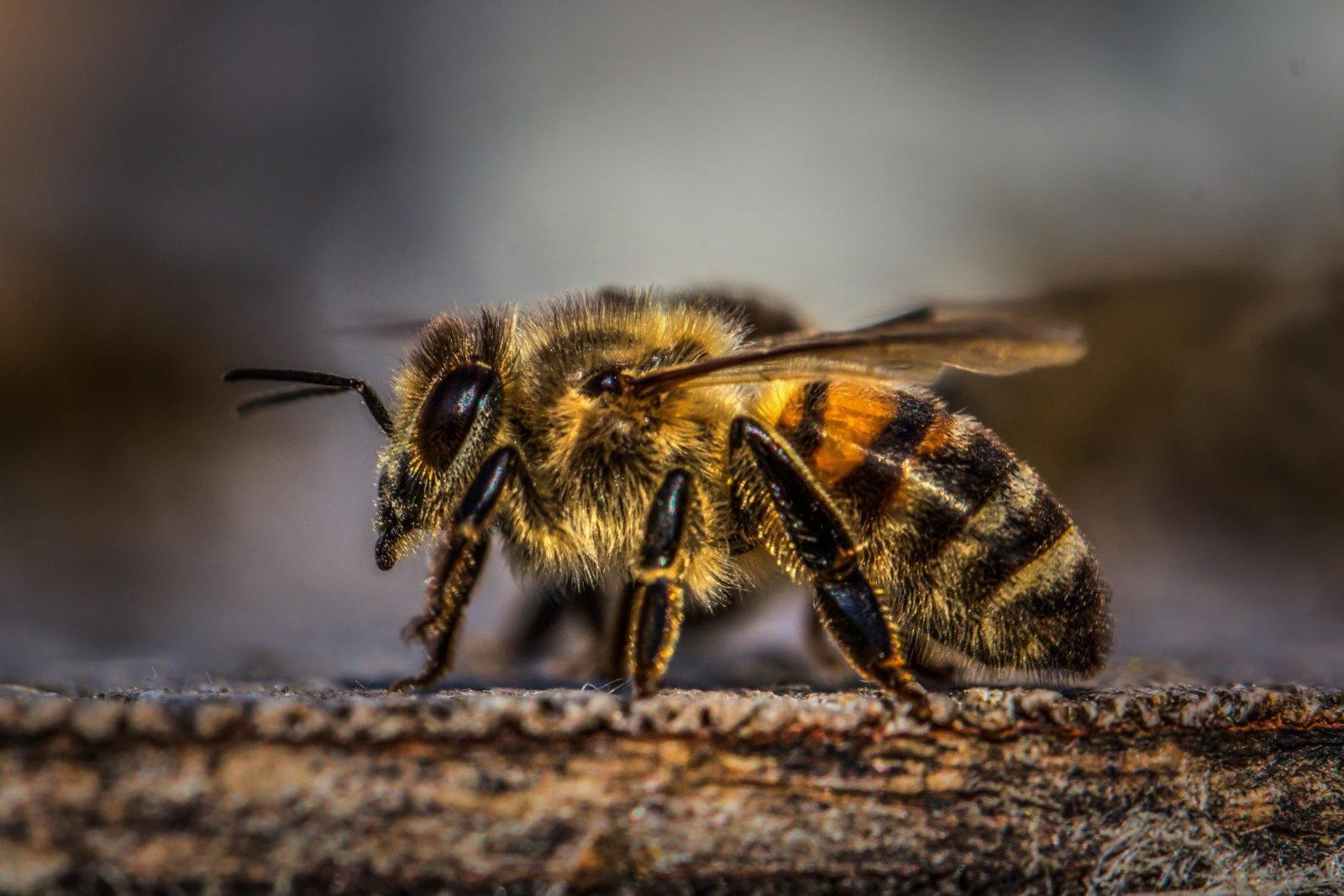 Há dieferentes tipos de mel de abelha.