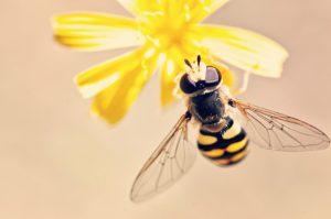 A abelha é um dos animais mais importantes do ecossistema.