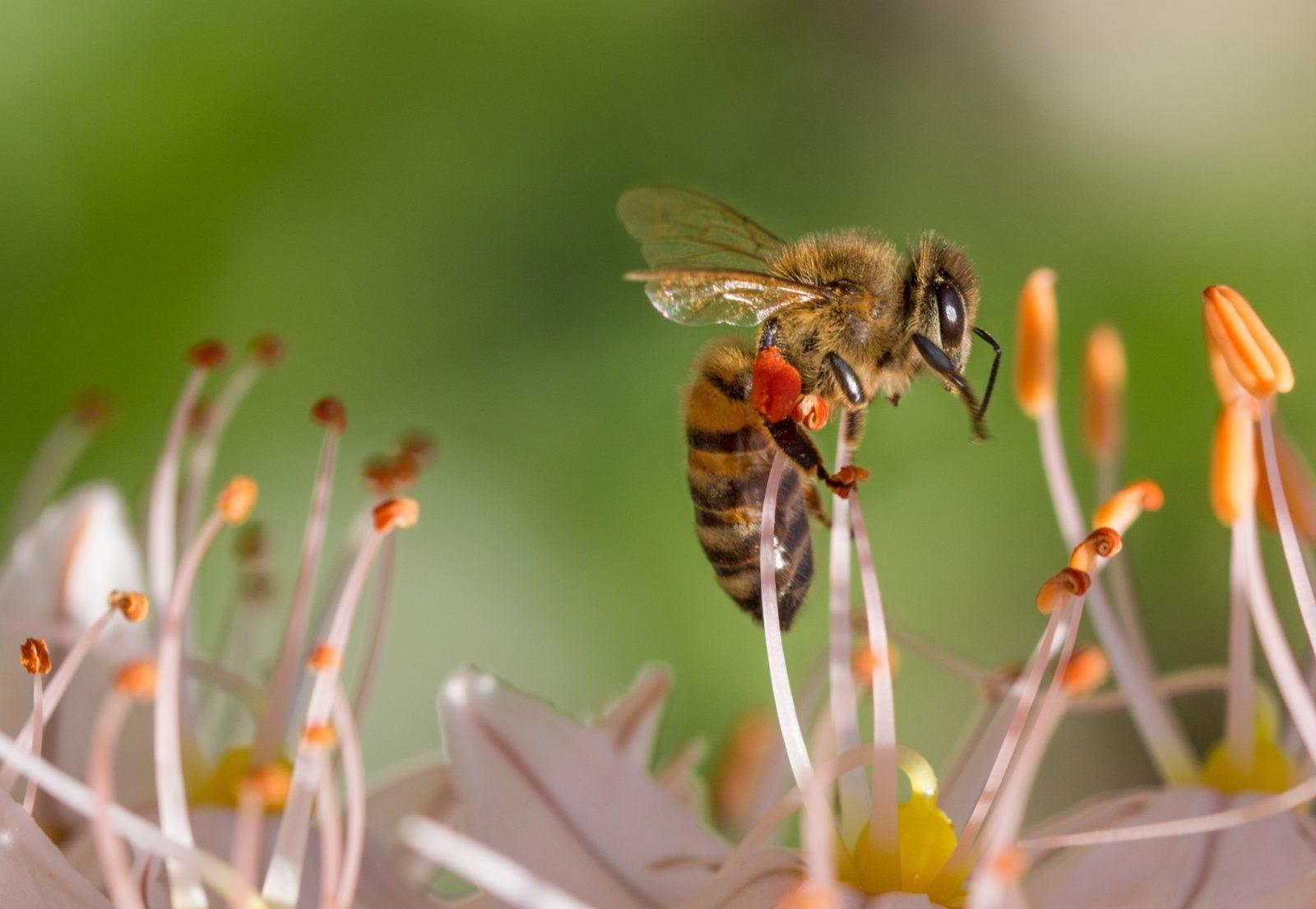 Em uma colméia existe a abelha rainha, o zangão e as operárias, cada um com uma função.