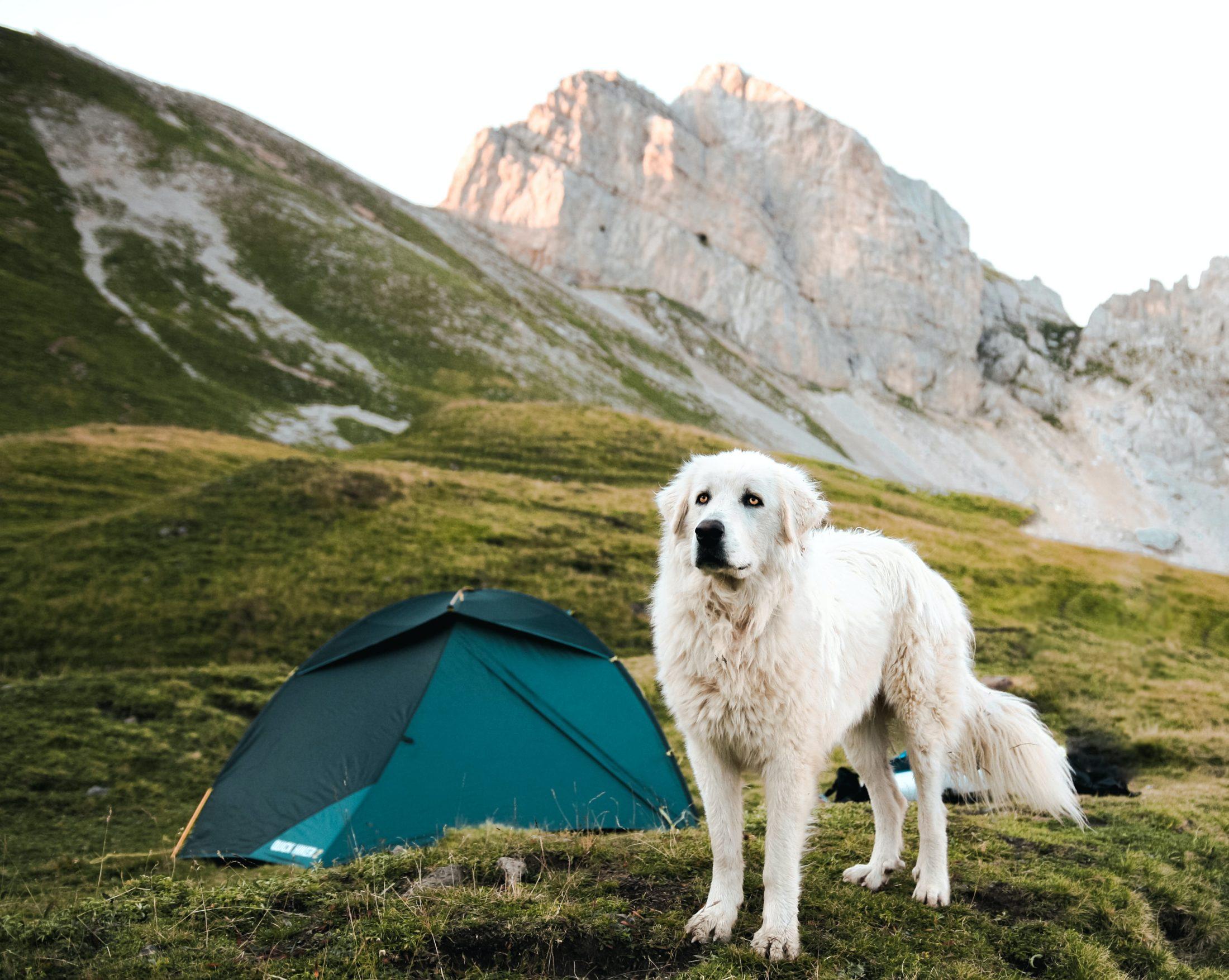 cachorro em acampamento