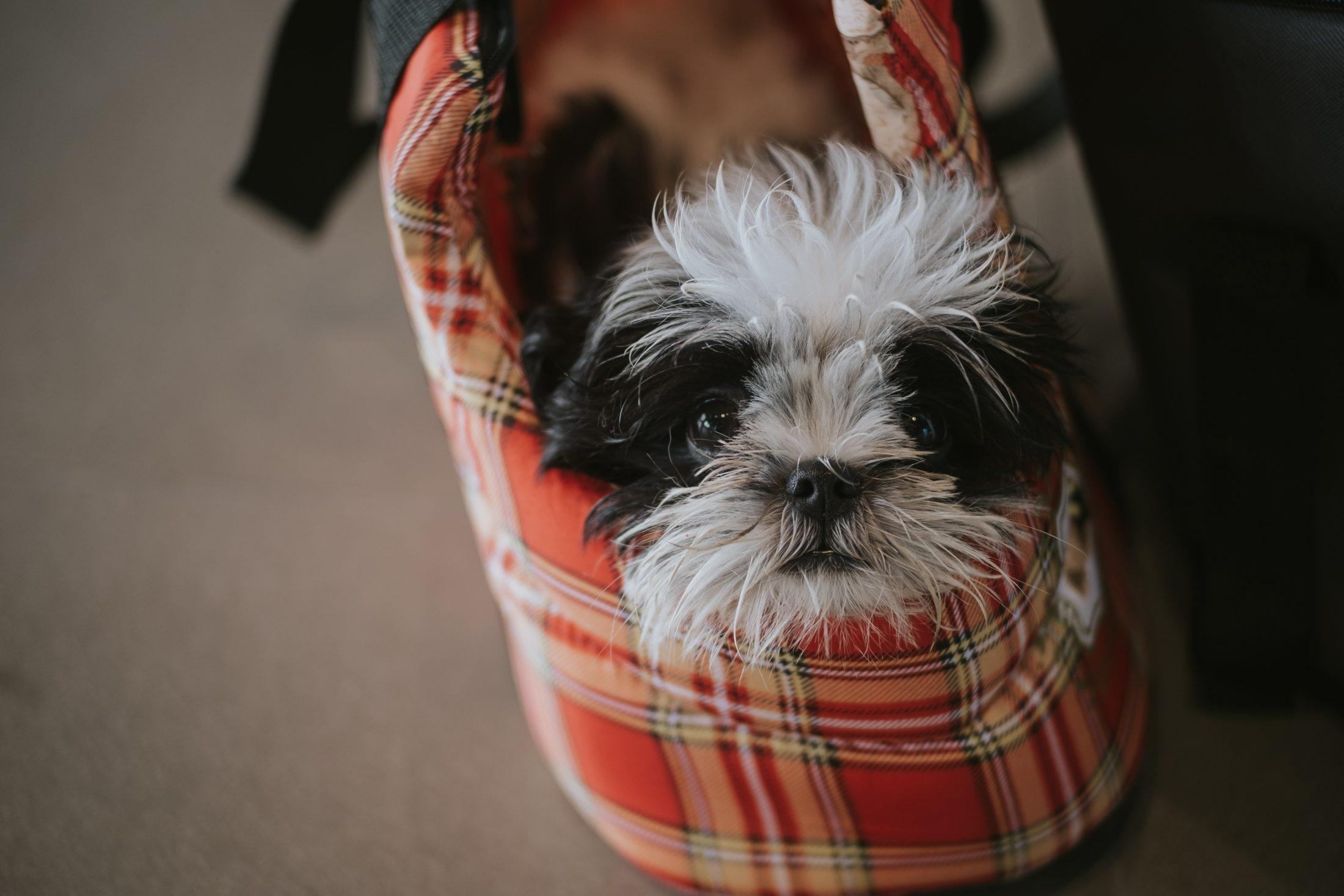 cachorro dentro de uma bolsa