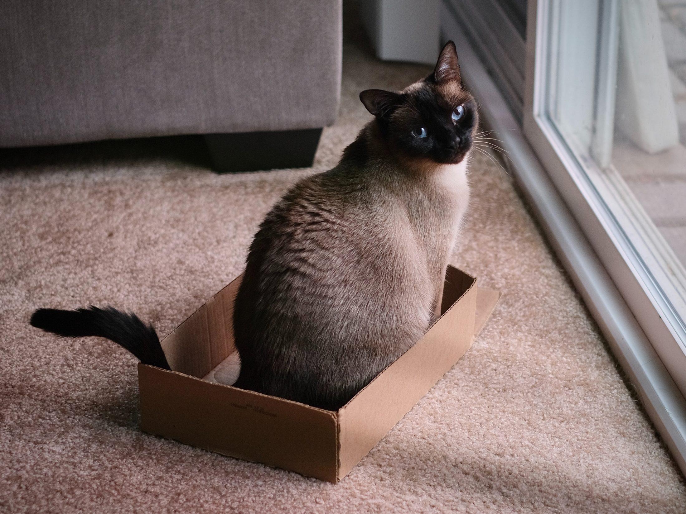 acessorios para cachorro e gato: caixa de papelão