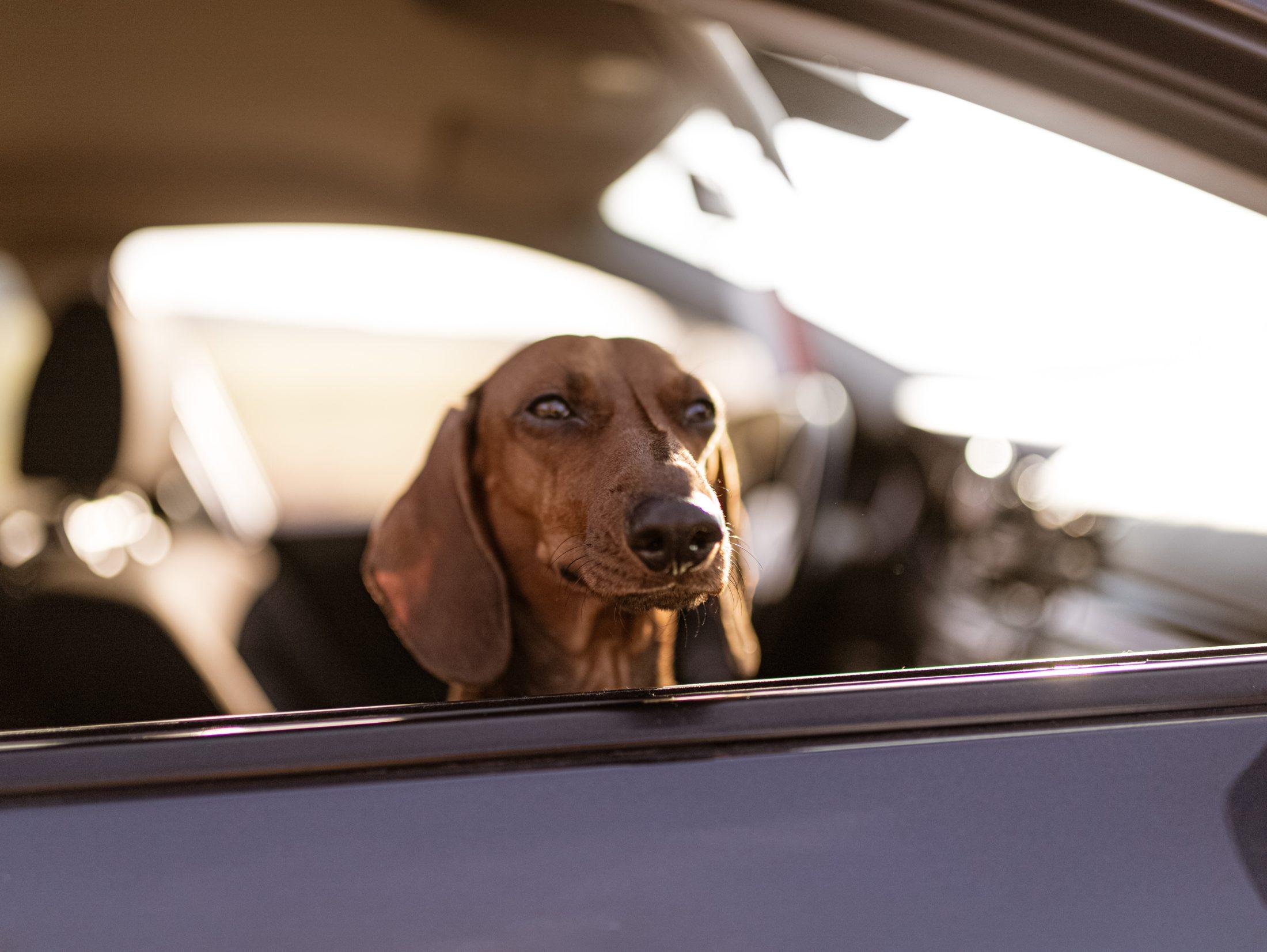 A cadeirinha para cachorro é também um dos acessórios para carro fundamentais para o conforto e segurança do animal.