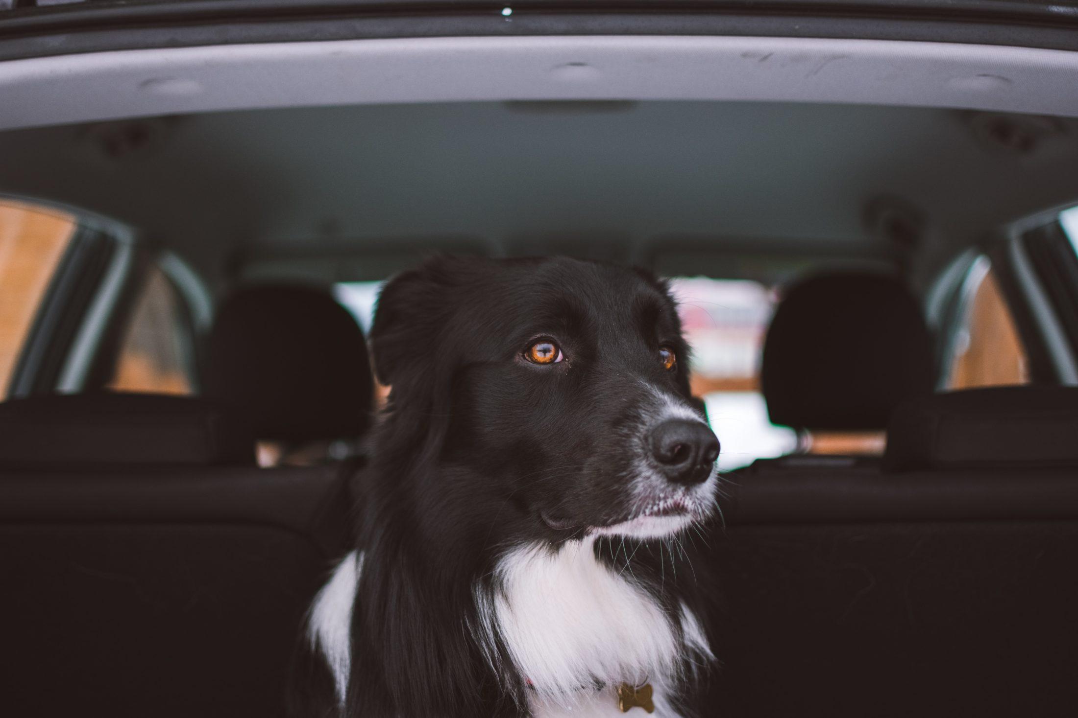 Os petiscos não são acessórios para carro, mas são excelentes calmantes na viagem.