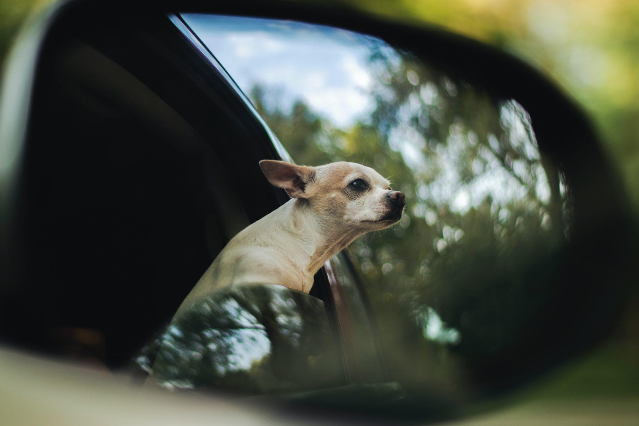 Proteger os vidros das janelas do carro com algum desses acessórios para carro pode ajudar a diminuir o calor.