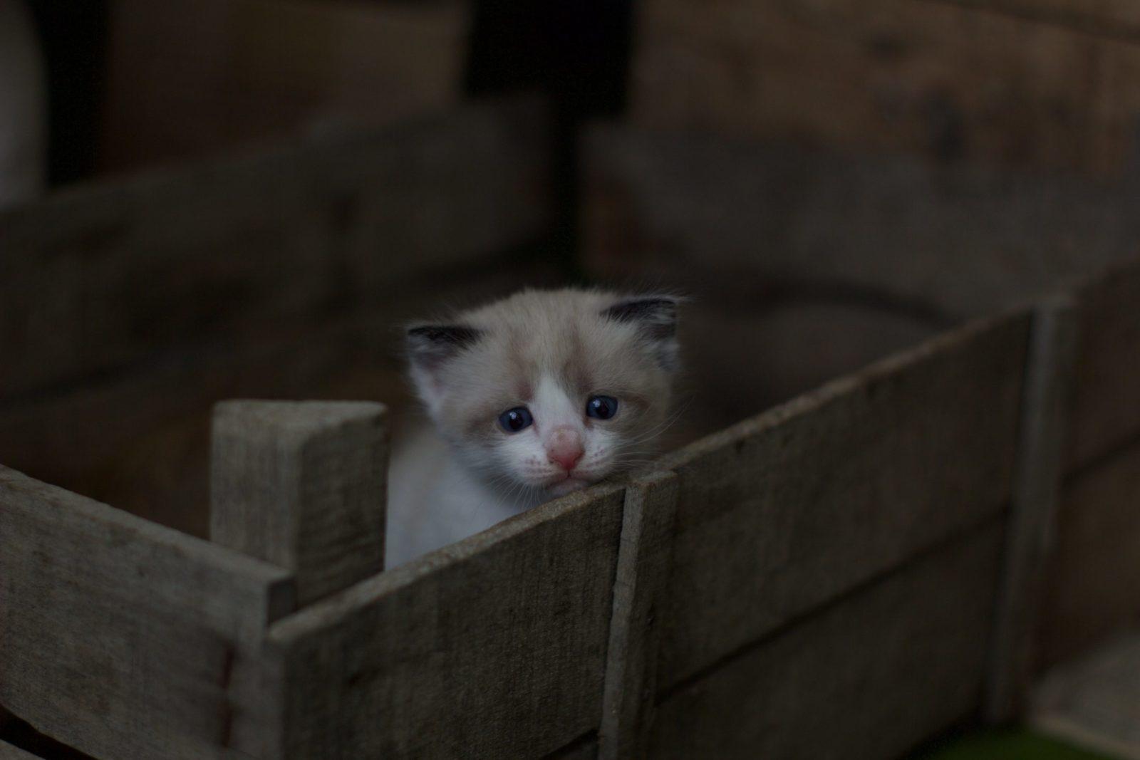 filhote em caixote de madeira para adoção de gatos