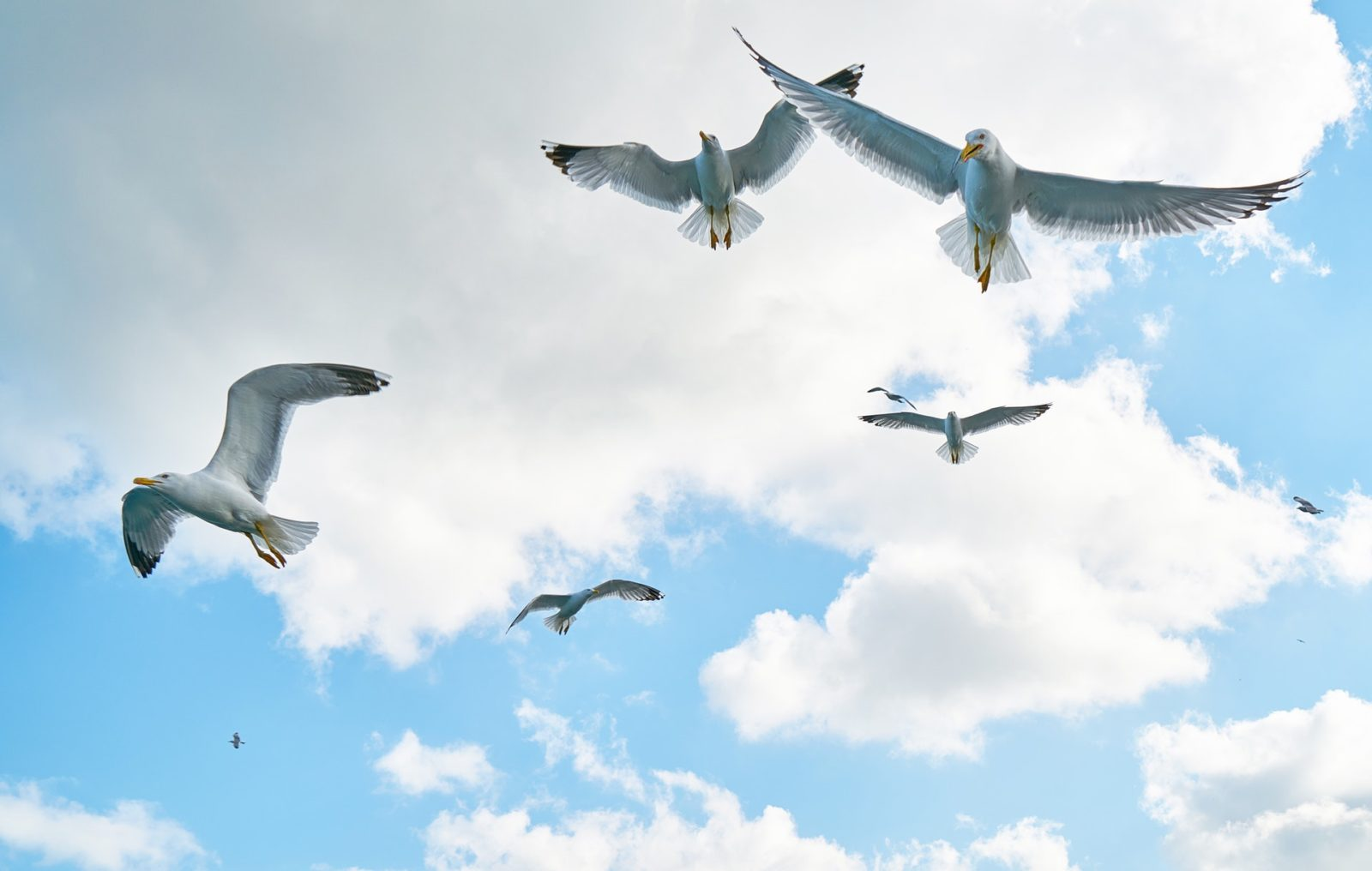 Infelizmente, o albatroz é mais uma ave em extinção.