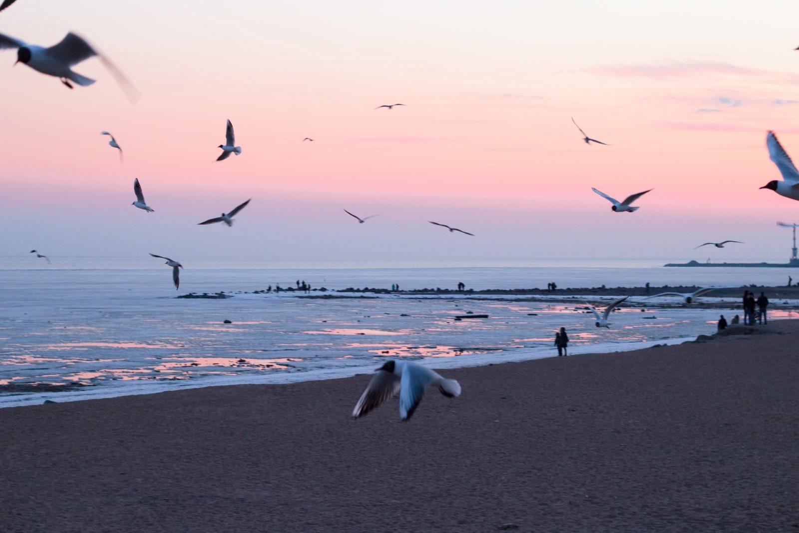No Brasil, é comum encontrar albatrozes durante o ano todo