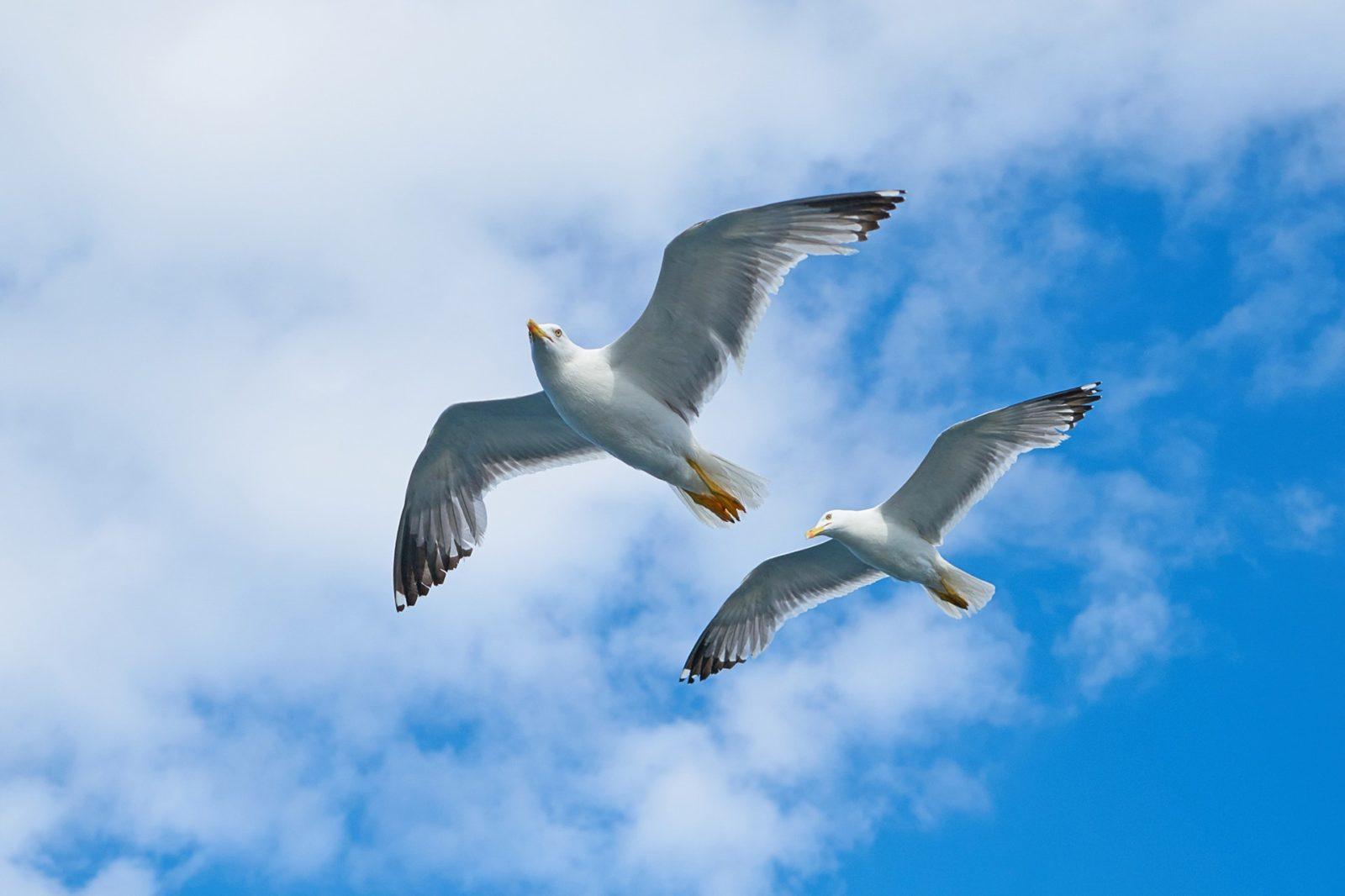 O albatroz é uma ave de bico grande, forte e de diferentes cores e plumagem, que varia entre o branco, o negro azulado e o pardo.