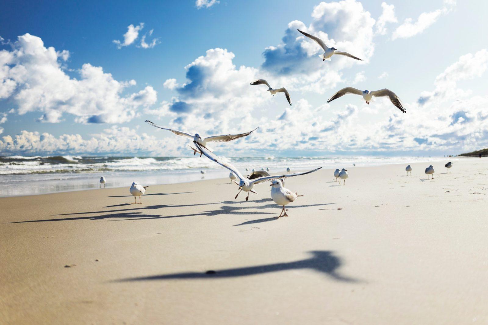O albatroz é uma ave marinha muito encontrada no hemisfério Sul.