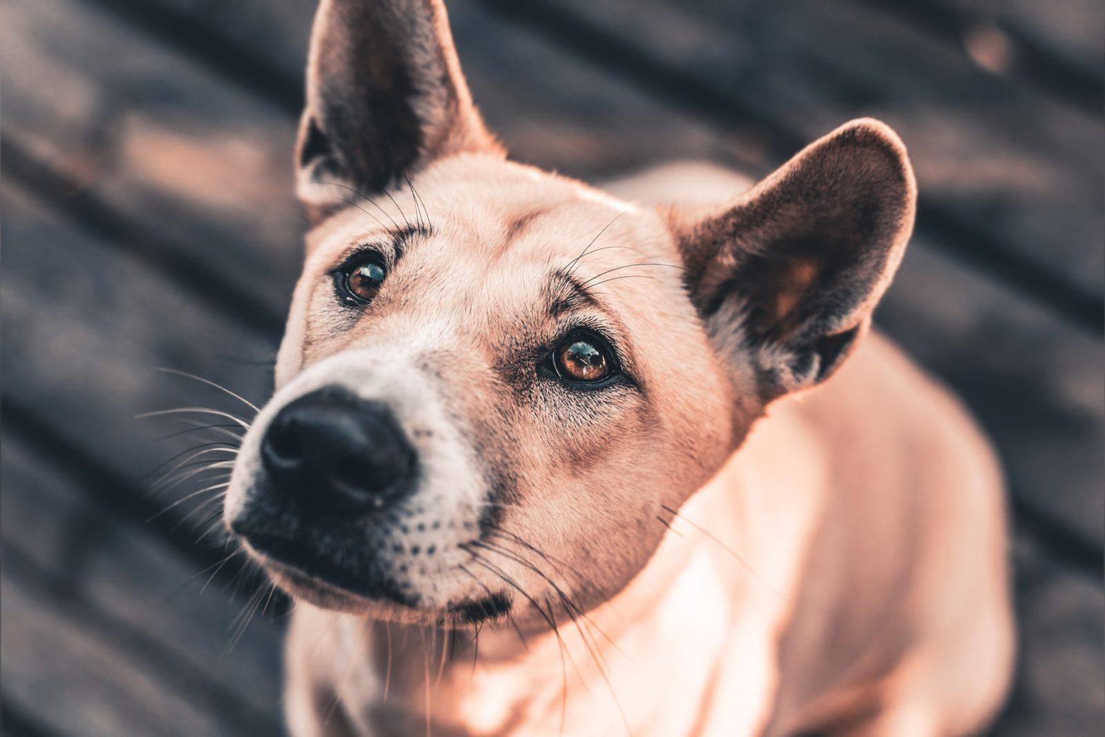 cachorro esperando por ração no seu alimentador automático
