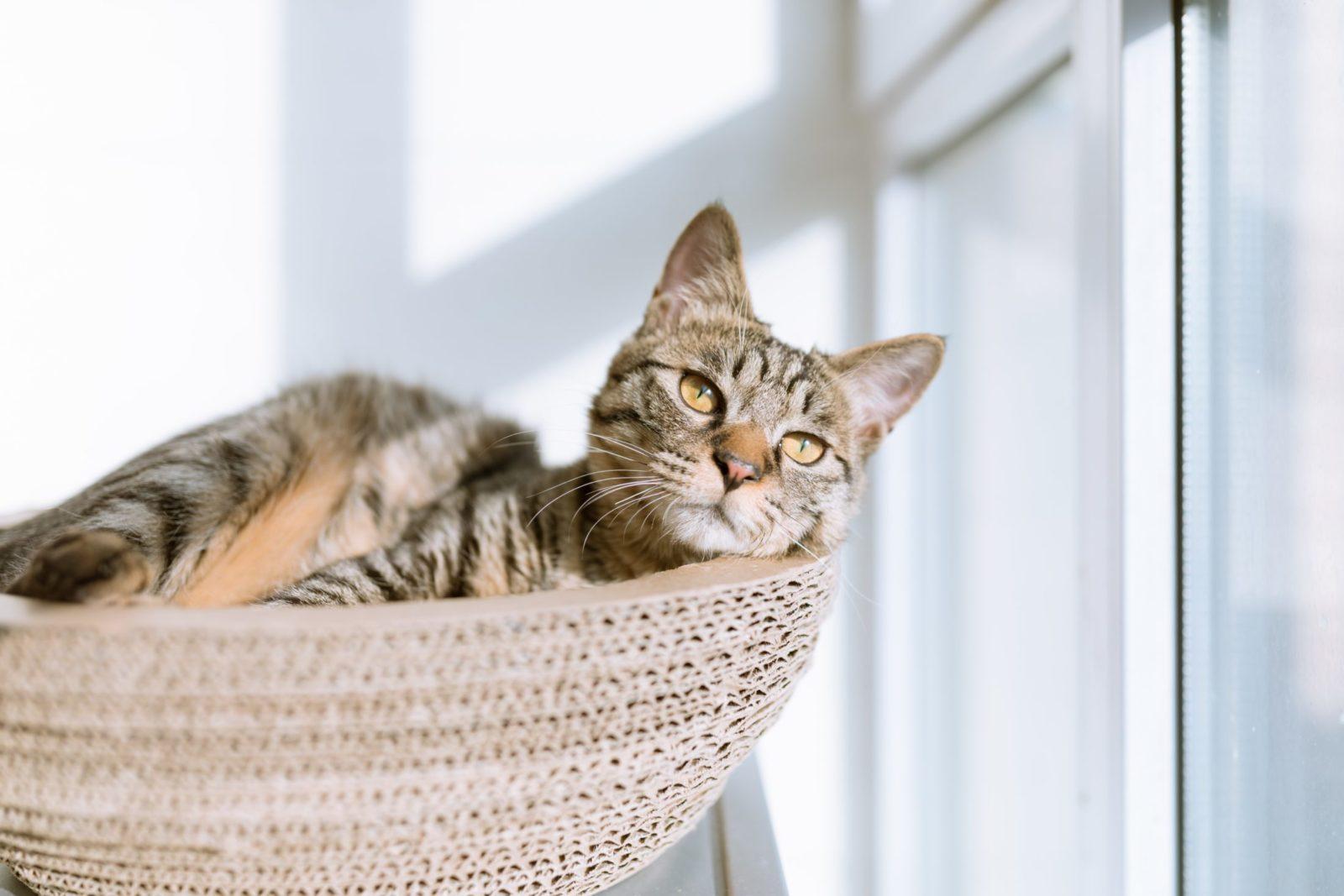 gato dentro de um cesto