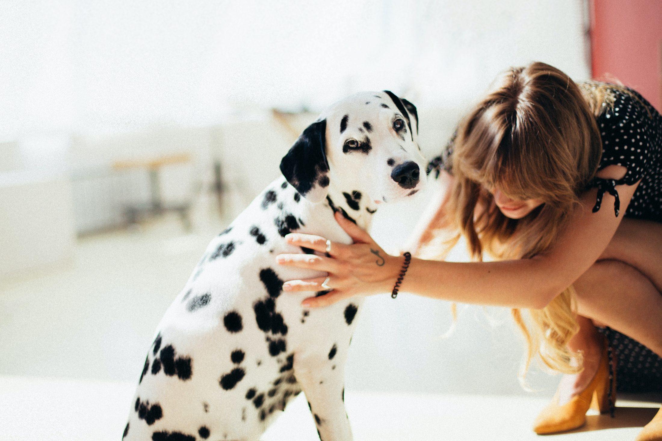 Amor de cachorro é demonstrar interesse pelo tutor em todo momento.